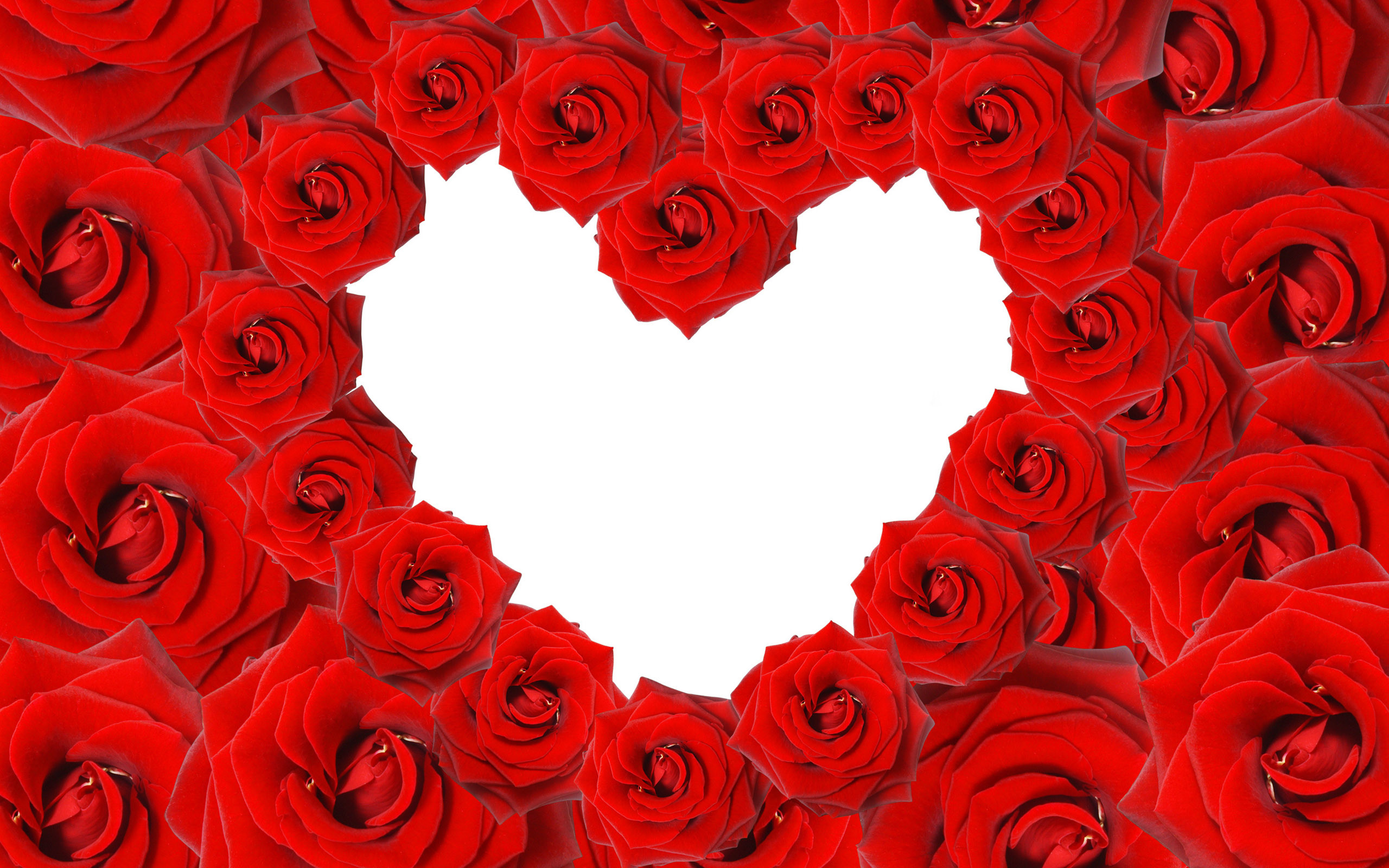 2560x1600 Red Roses & Love Heart