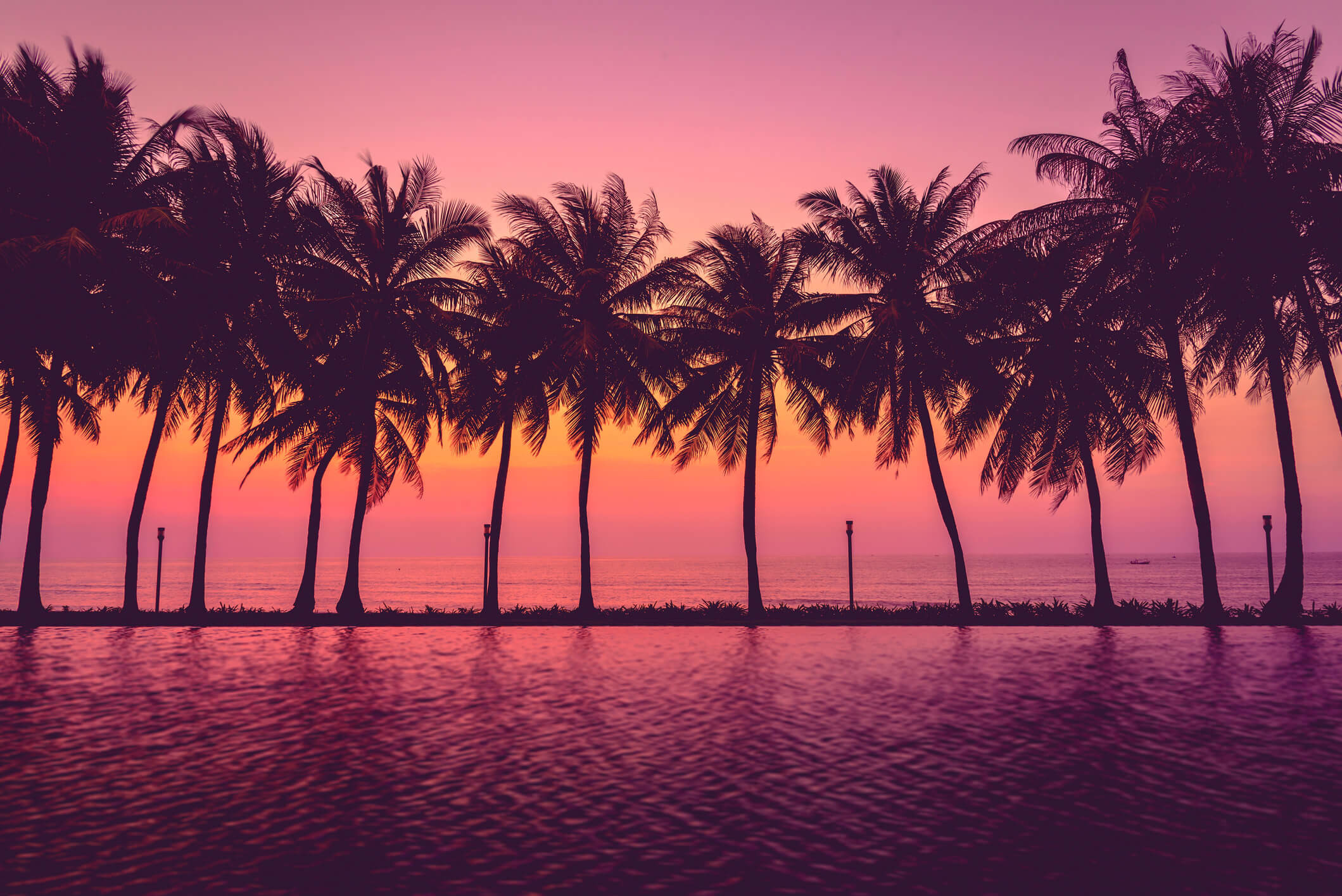 Palm Tree Wallpaper Desktop (69+ images)