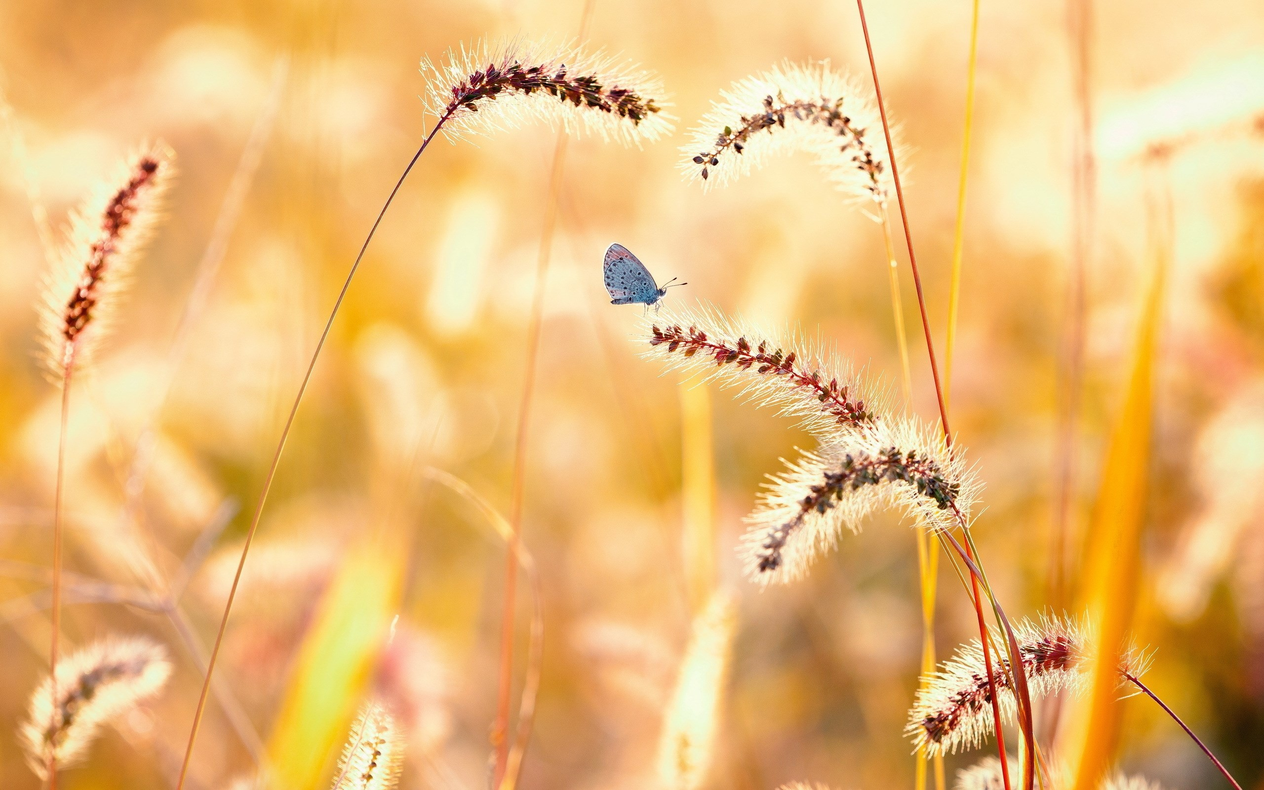 2560x1600 Butterfly Nature Summer Field