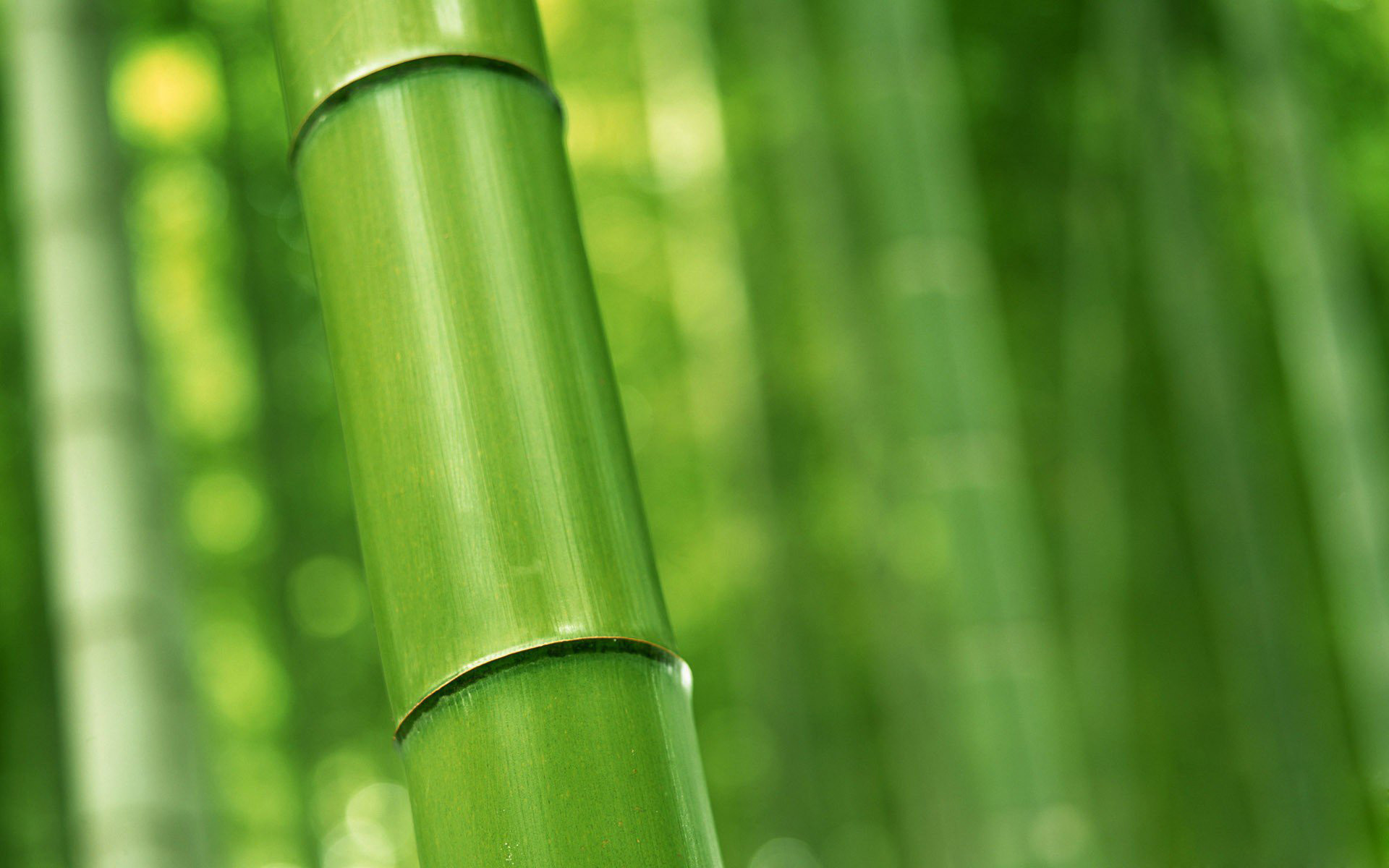 1920x1200 Bamboo wallpapers plants hd.