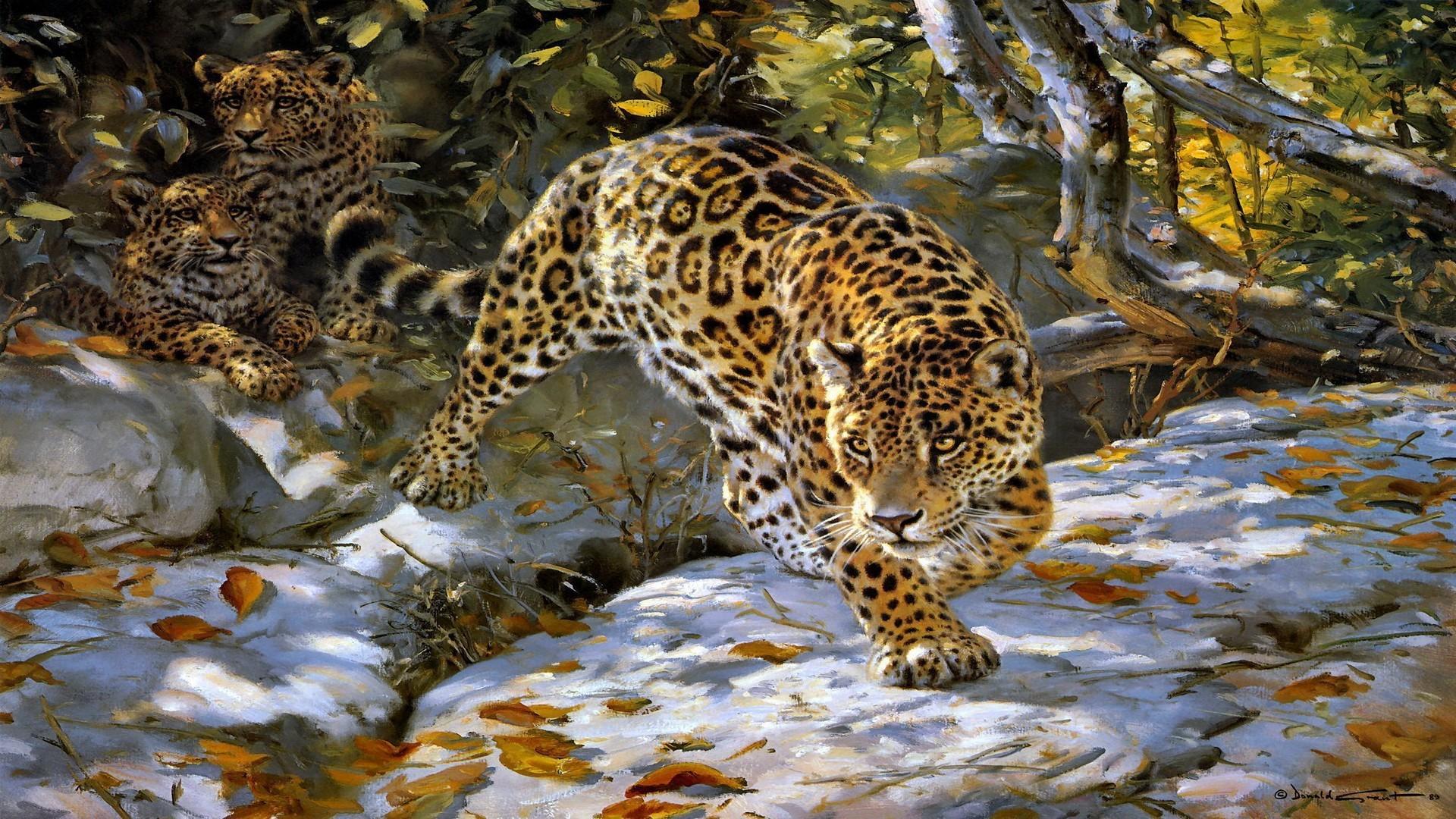 Jaguar wallpapers 63 images - Jaguar hd pics ...