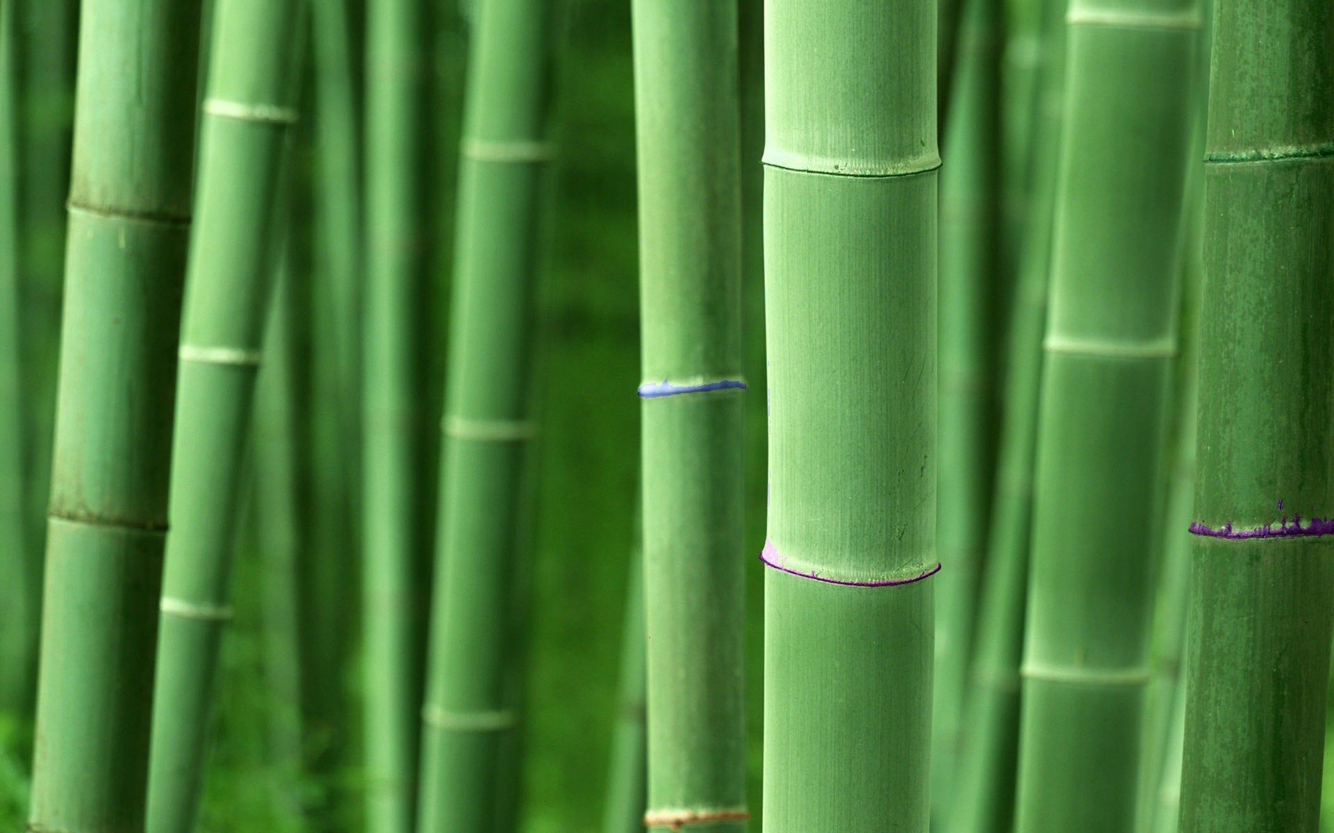 1920x1200 Earth - Bamboo Wallpaper