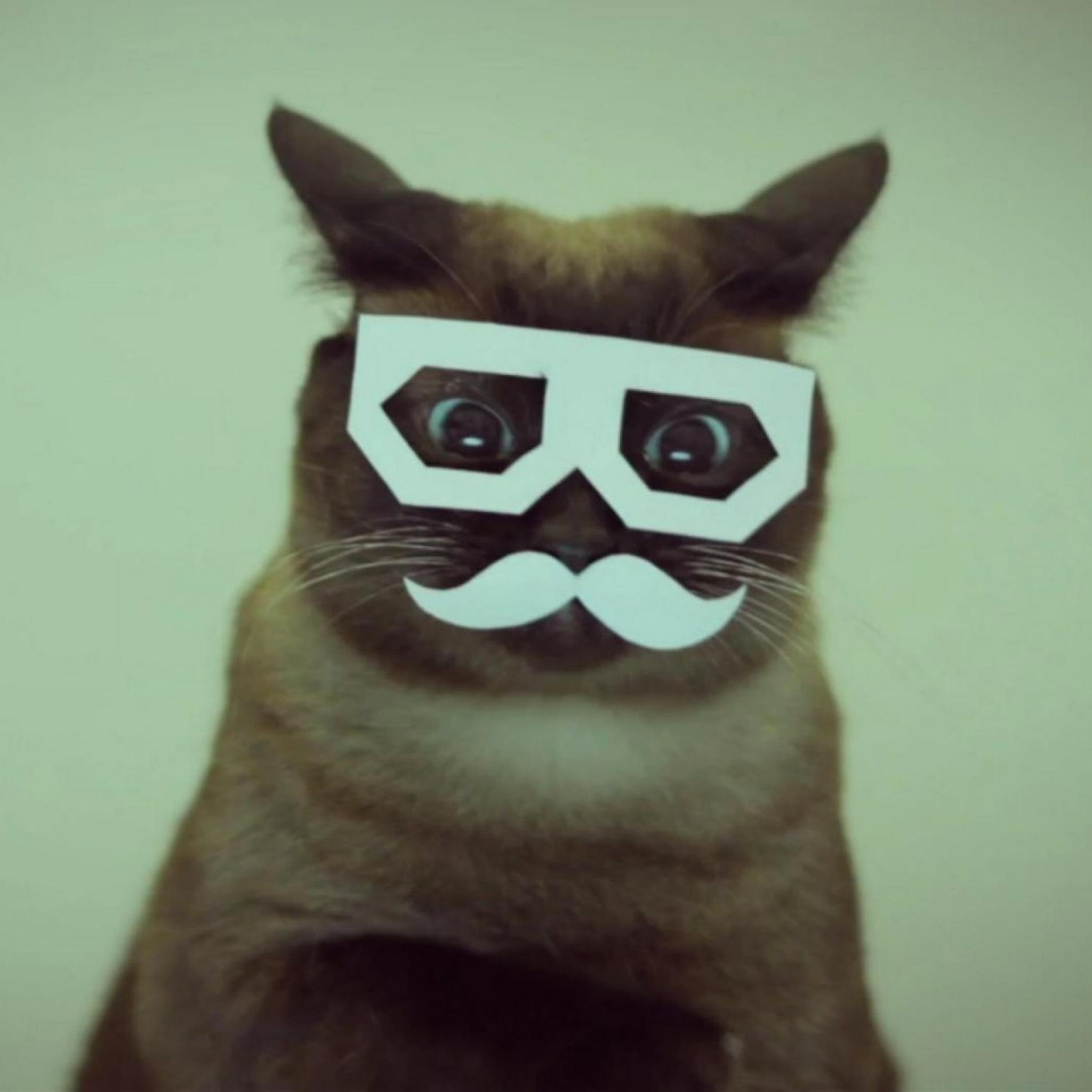 2048x2048 Funny Cat Moustache Glasses Ipad 3 Wallpaper And 4 Cute