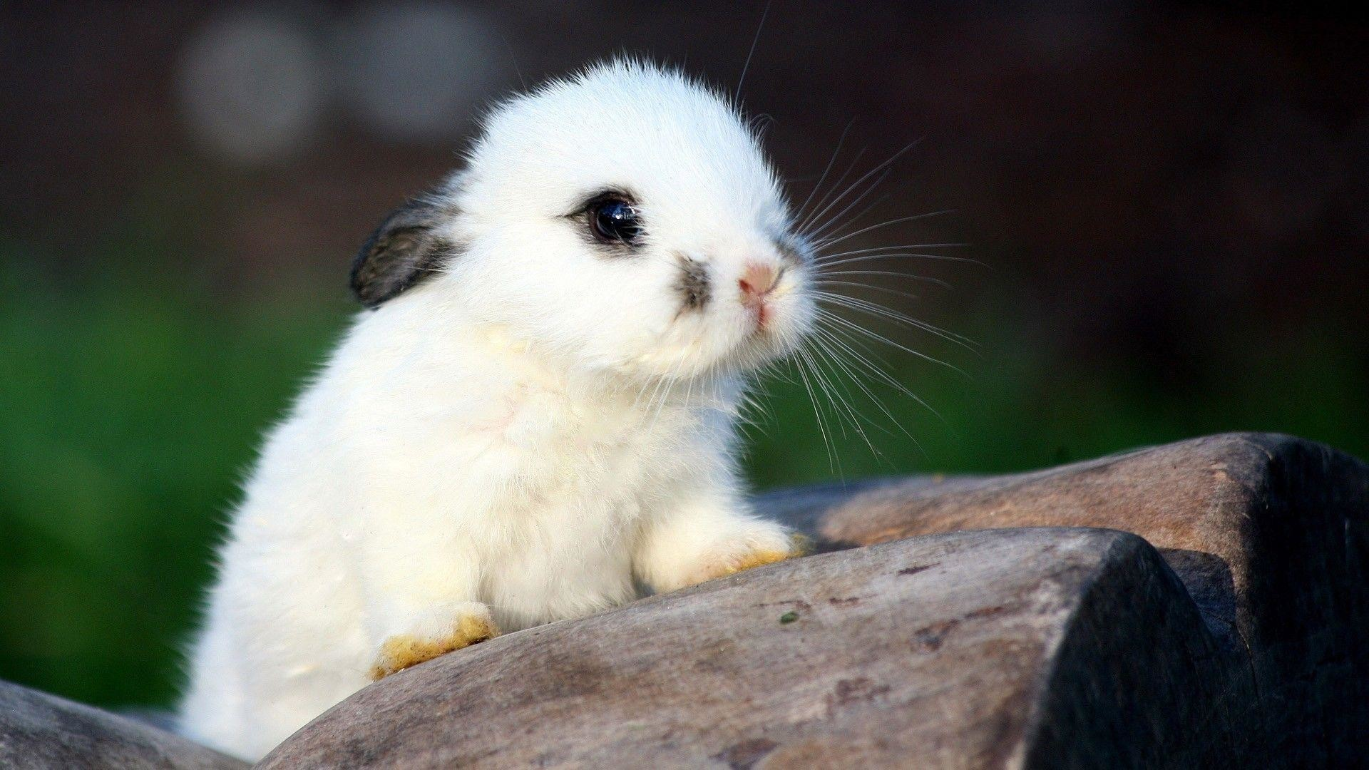 Cute Animal Wallpapers For Desktop (54+ Images