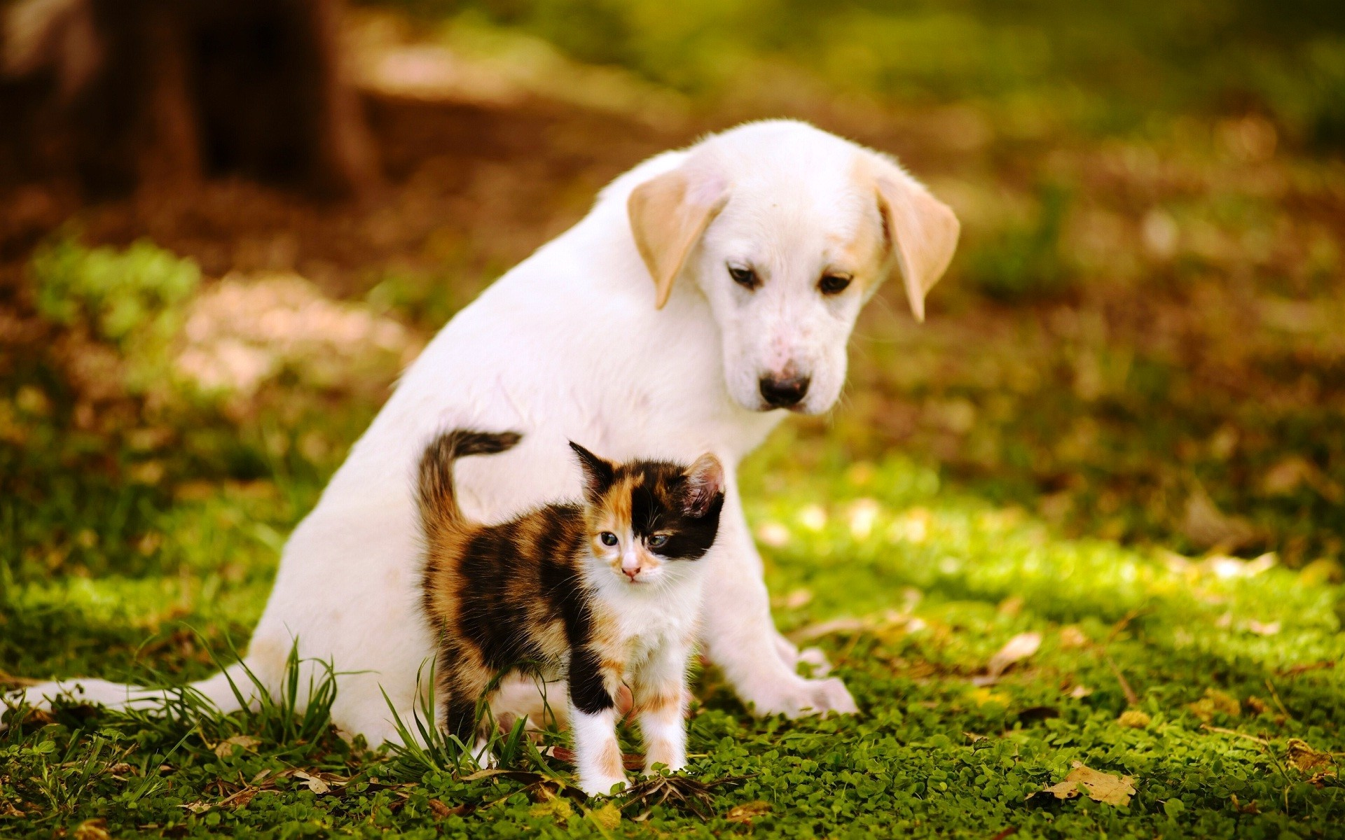 1920x1200 Cute Baby Cat And Dog Wallpapers New Hd Download