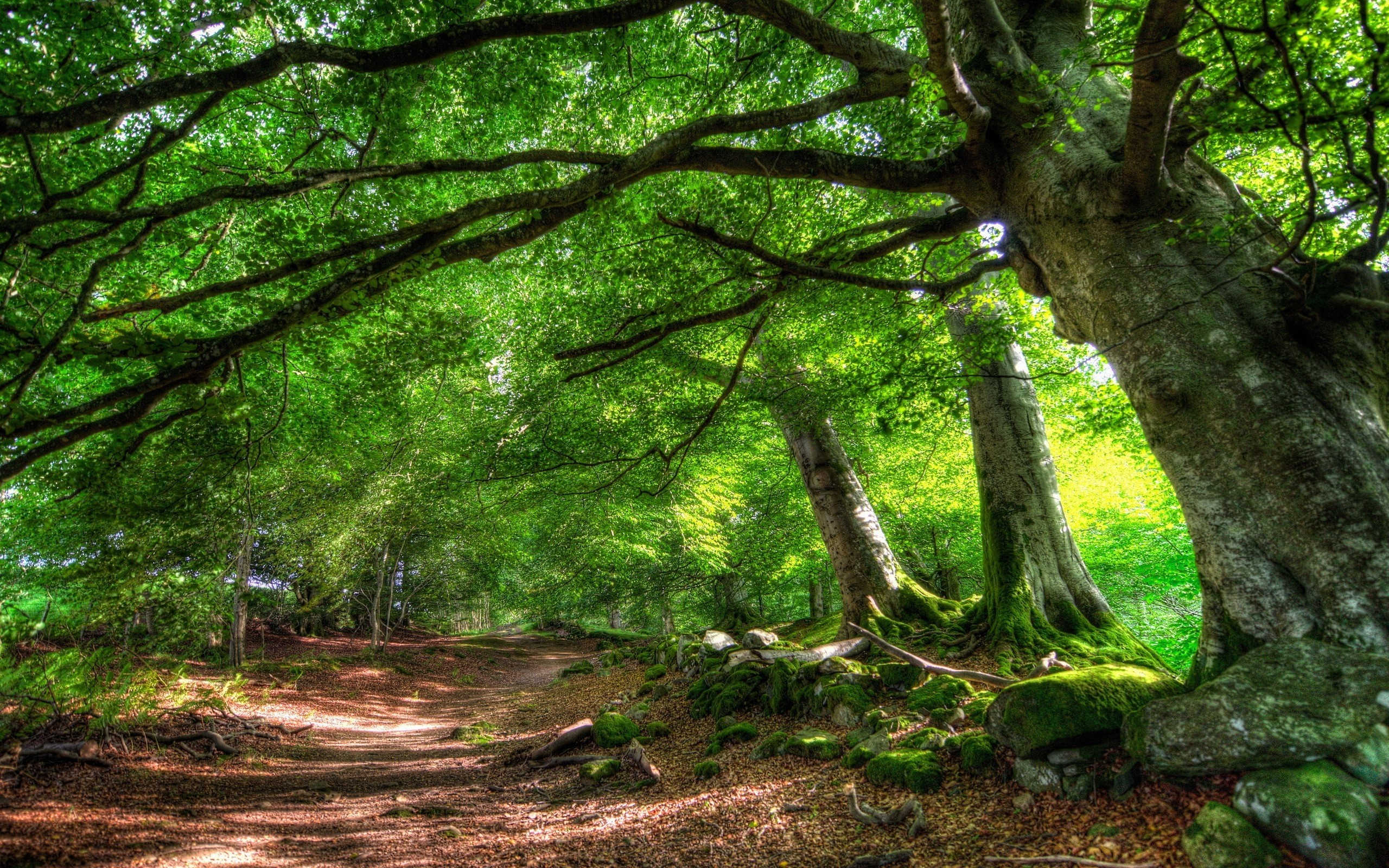 1920x1200 Full Hd 1080p Forest Wallpapers Desktop Backgrounds 1920x1080