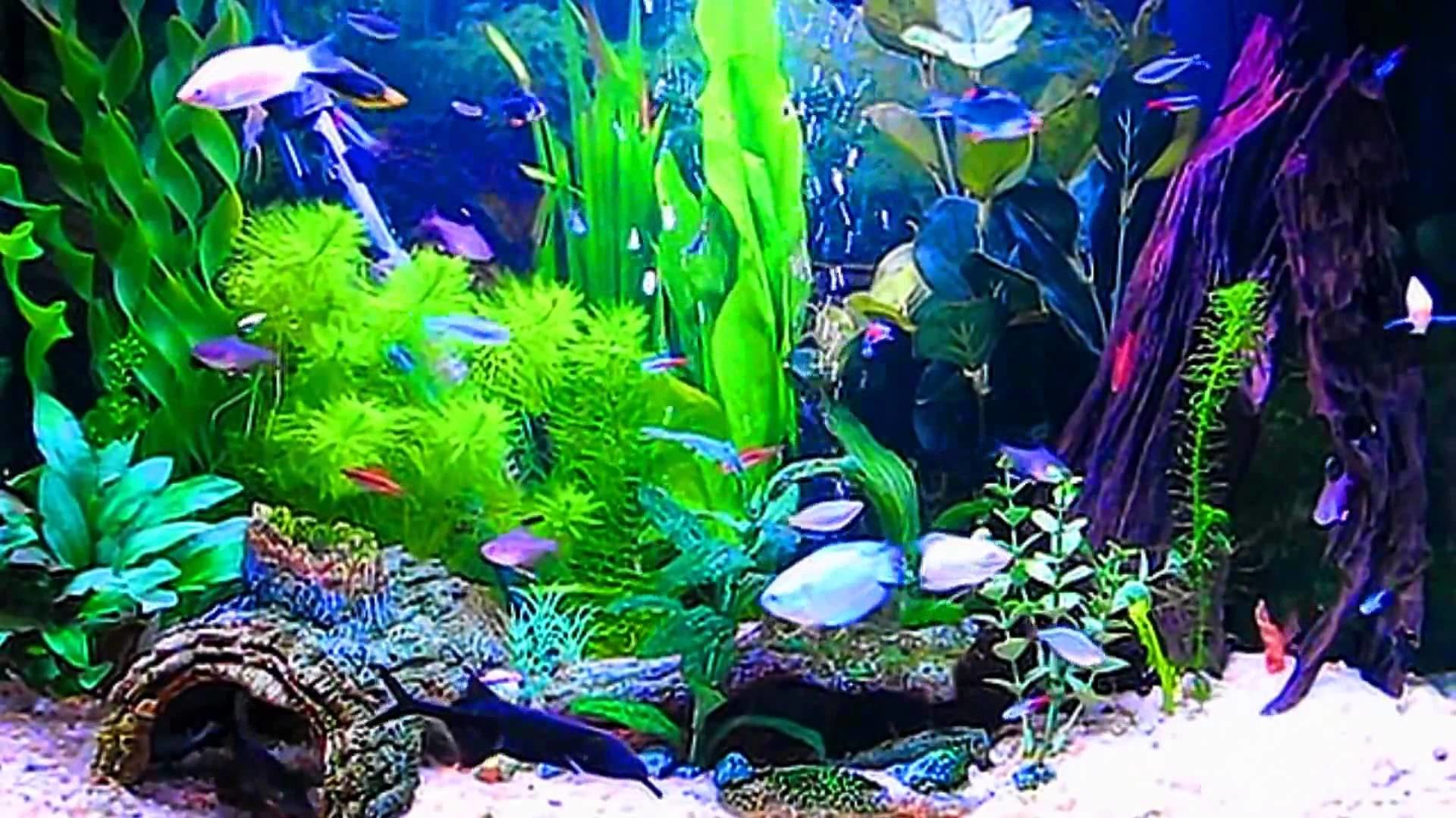 1920x1080 Desktop Aquarium 3D Live Wallpaper on Imac - YouTube · Download