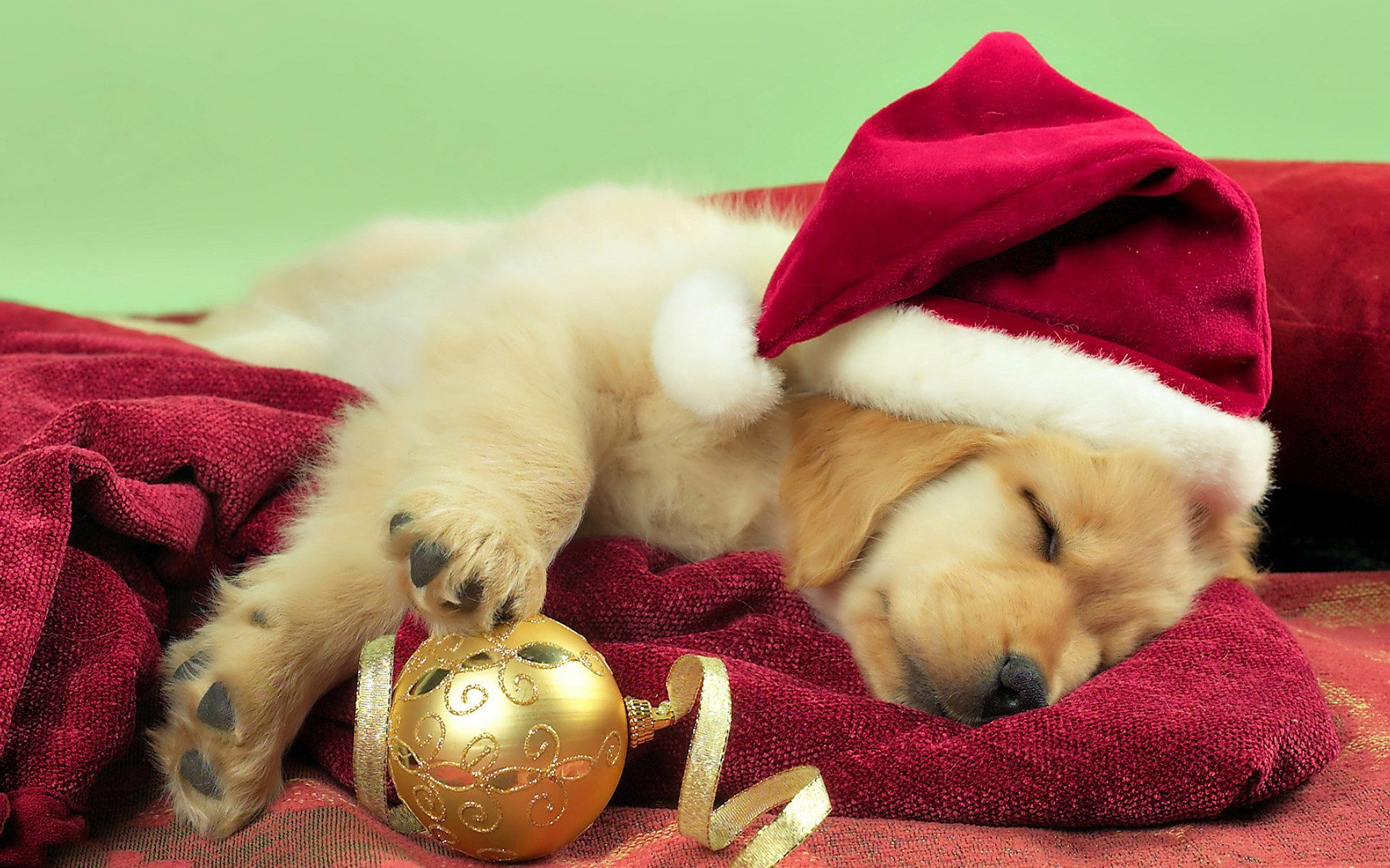 2560x1600 Puppy Christmas Gift