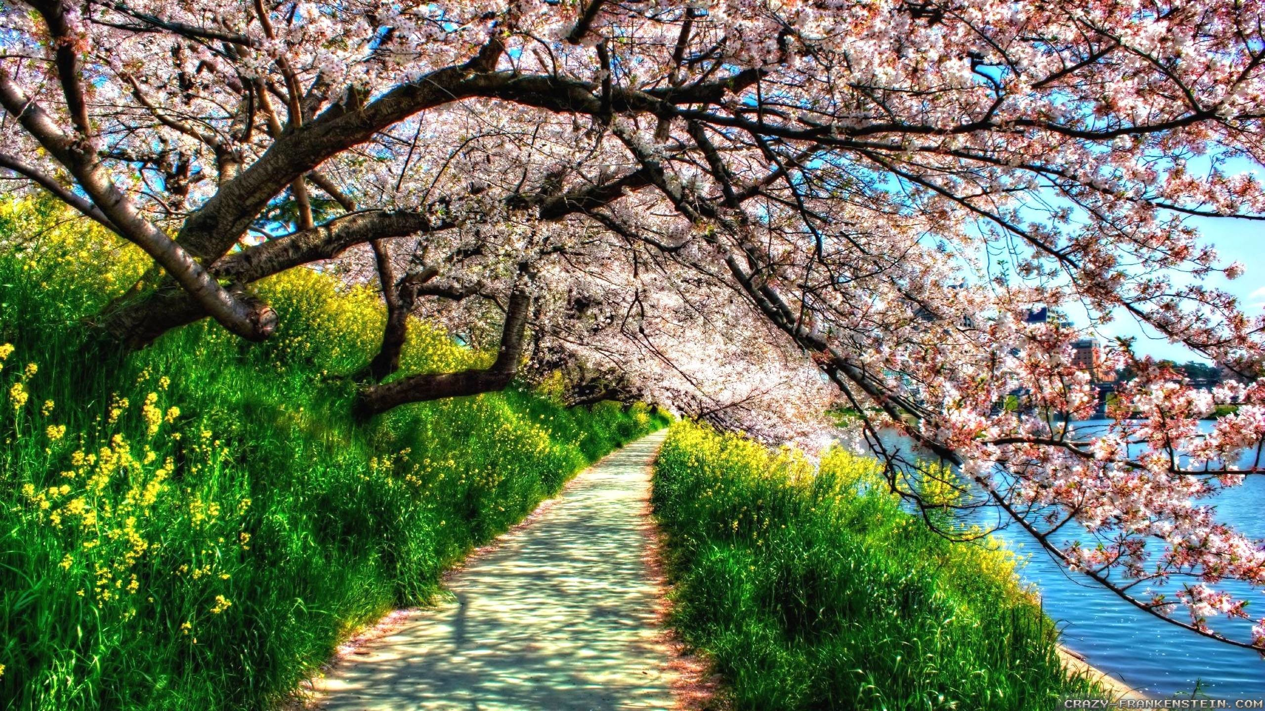 Spring Nature Wallpapers 56 Images