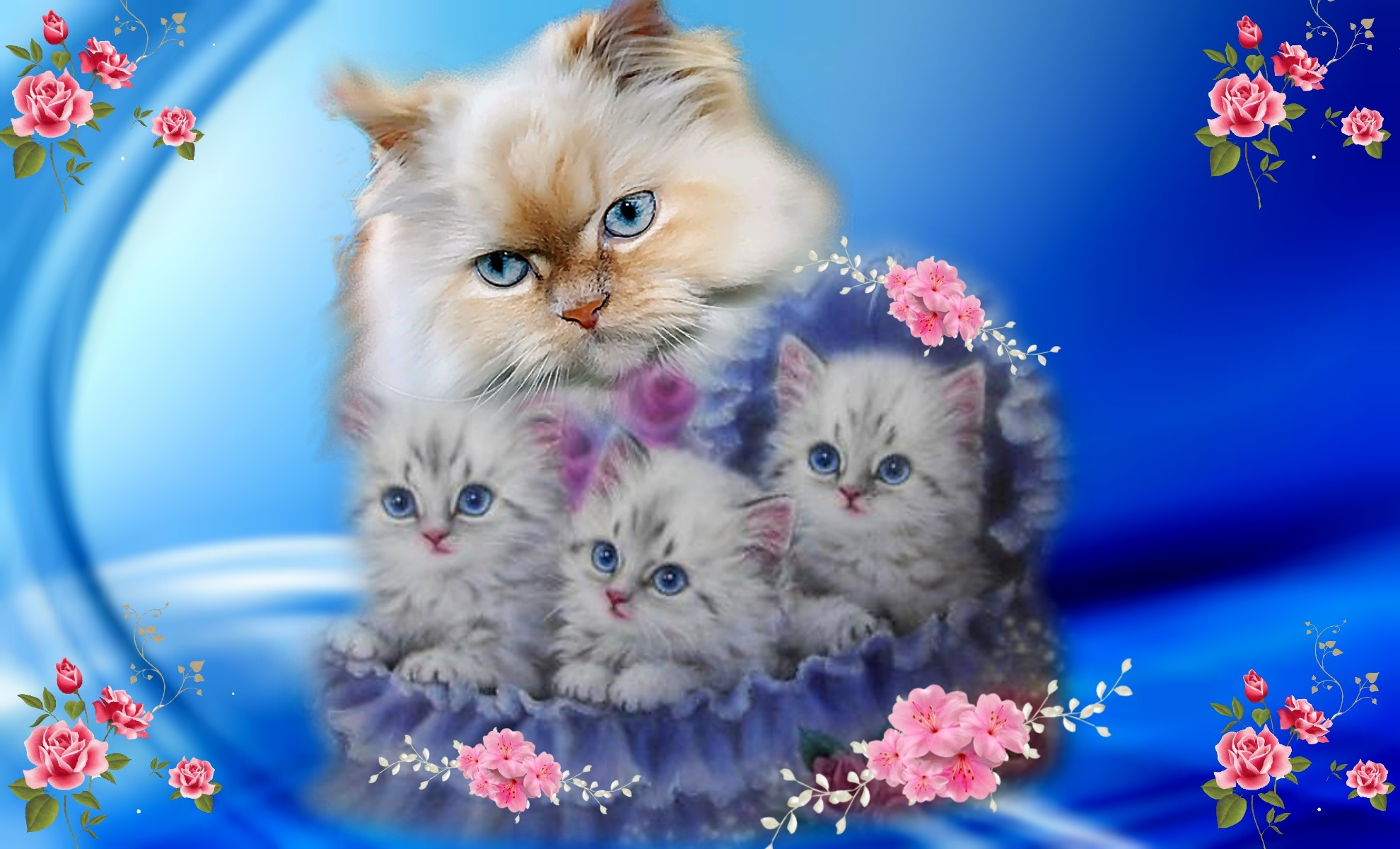1980x1200 Kitens Beautiful Blue Pretty Pink Roses Cute Cats Phone Wallpapers .