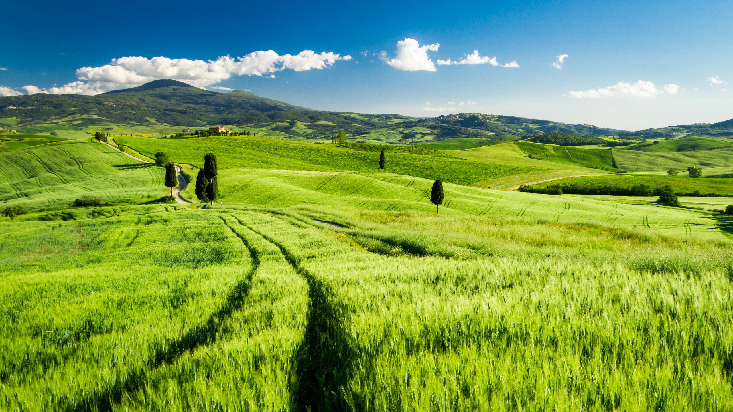 2560x1440 Home - Wallpapers / Photographs - Locality, Landscape - Bright Tuscany.  Bright Tuscany