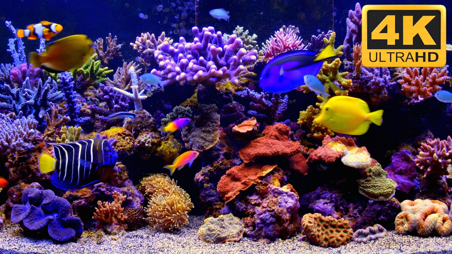 Aquarium live wallpaper for pc 55 images for Fish tank screen