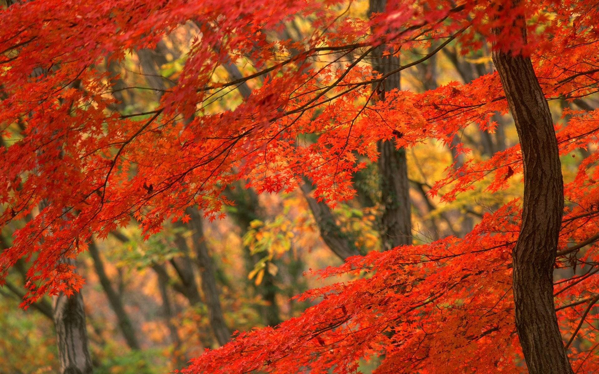 Autumn Leaves Desktop Wallpaper 57 images