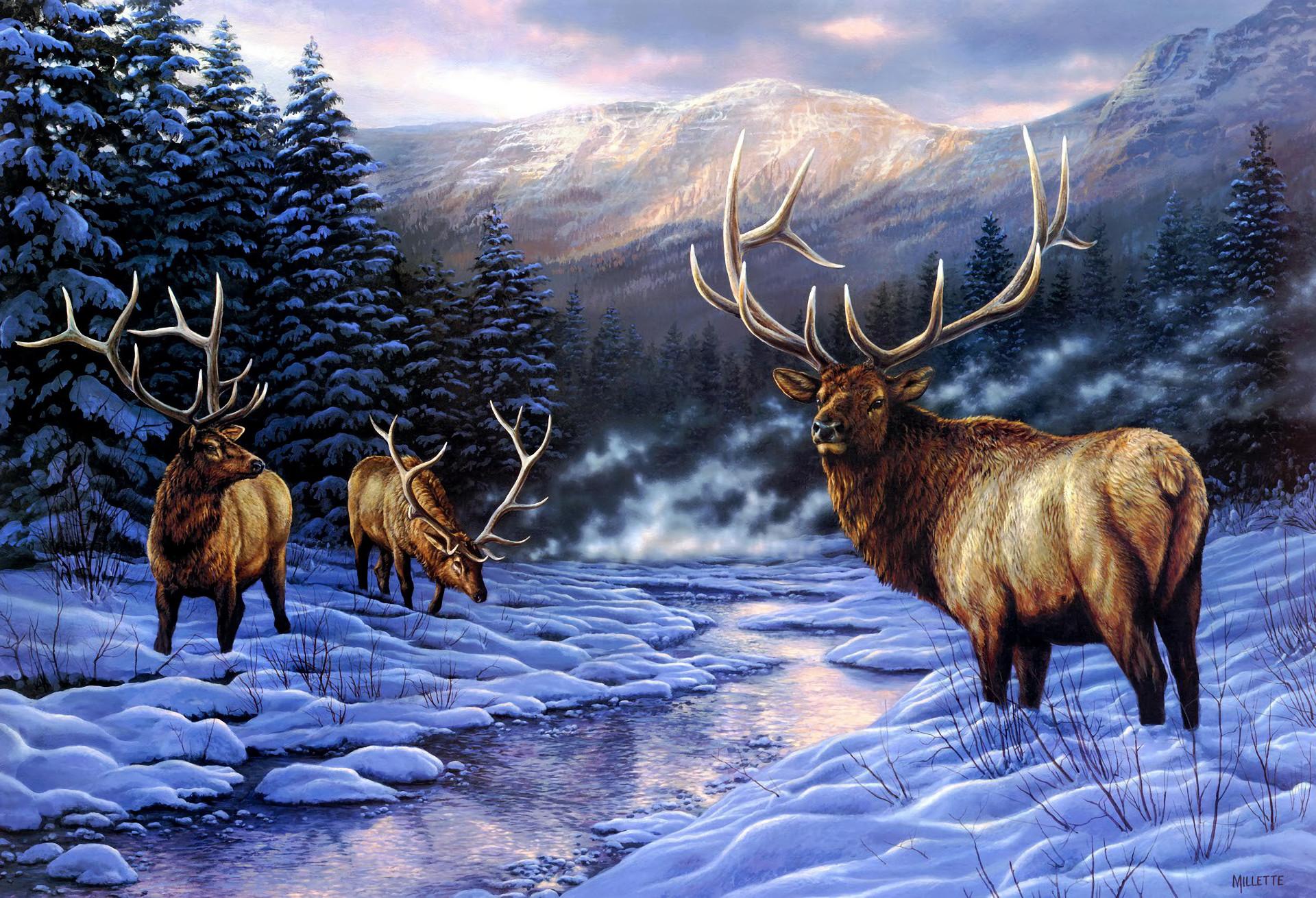 Whitetail deer desktop backgrounds 58 images - Elk hunting wallpaper ...