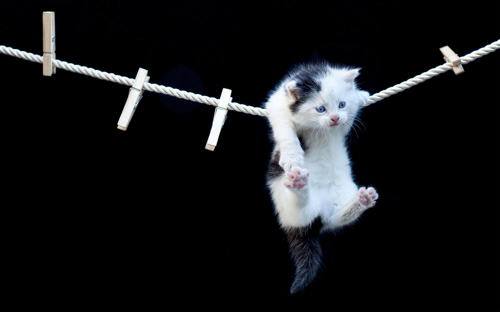 1920x1200 Cute Hanging Kitten HD Desktop Wallpaper available for Free Download at  MrHDWallpapers.com!