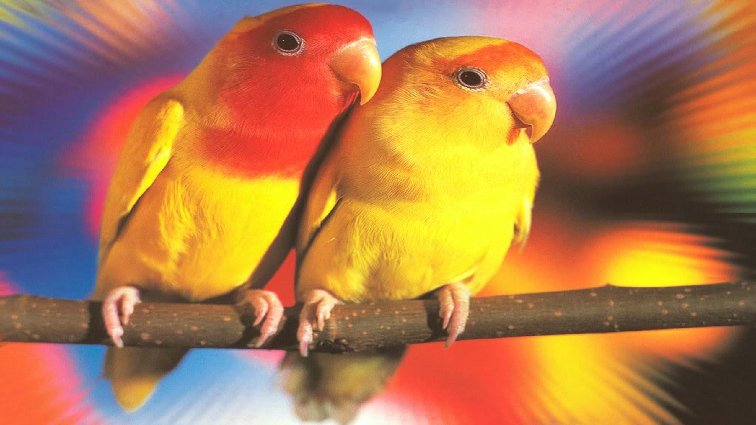 Wallpapers Love Birds Desktop Wallpapers: Lovebirds Wallpaper (56+ Images