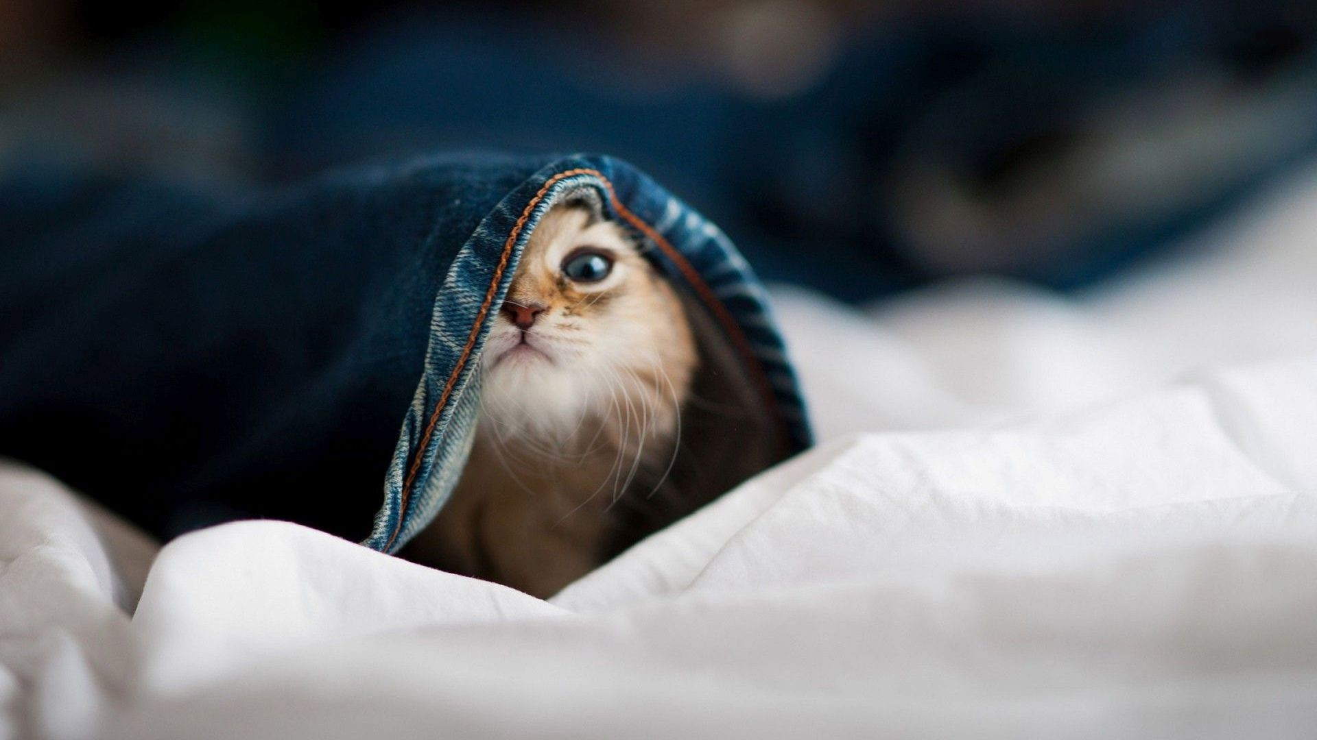 Cute Baby Animals Wallpapers (61+ images)
