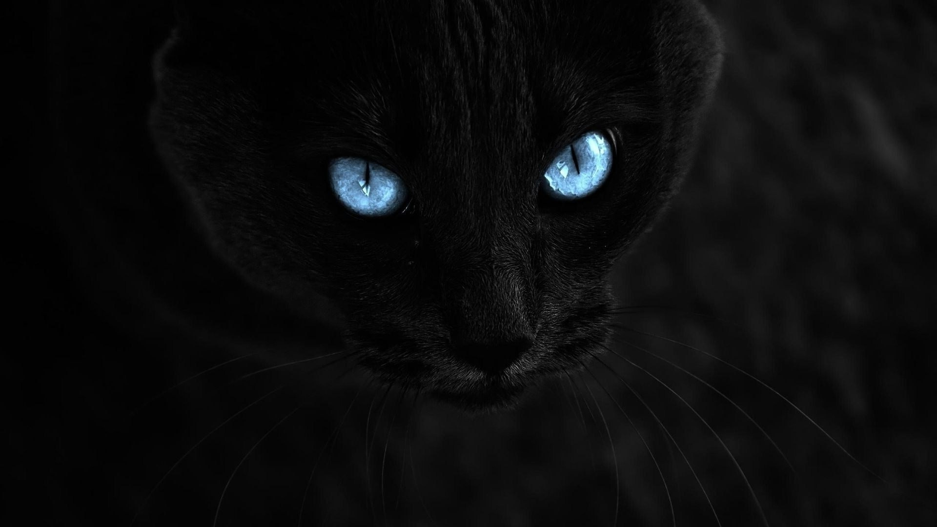 Hd Cat Wallpapers 1920x1080 69 Images: Black Cat Eyes Wallpaper (69+ Images