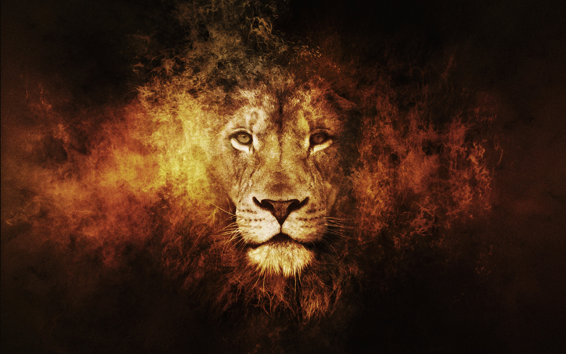 1920x1200 abstract lion wallpaper