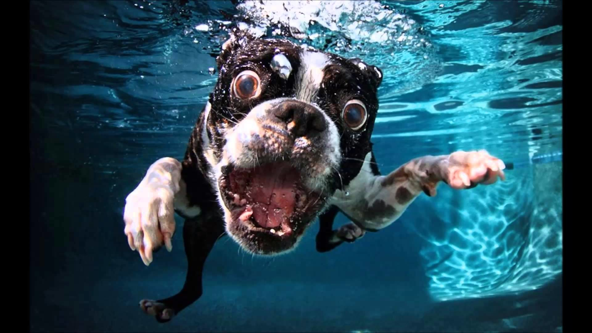 1920x1080 Underwater Dogs Drowning pool