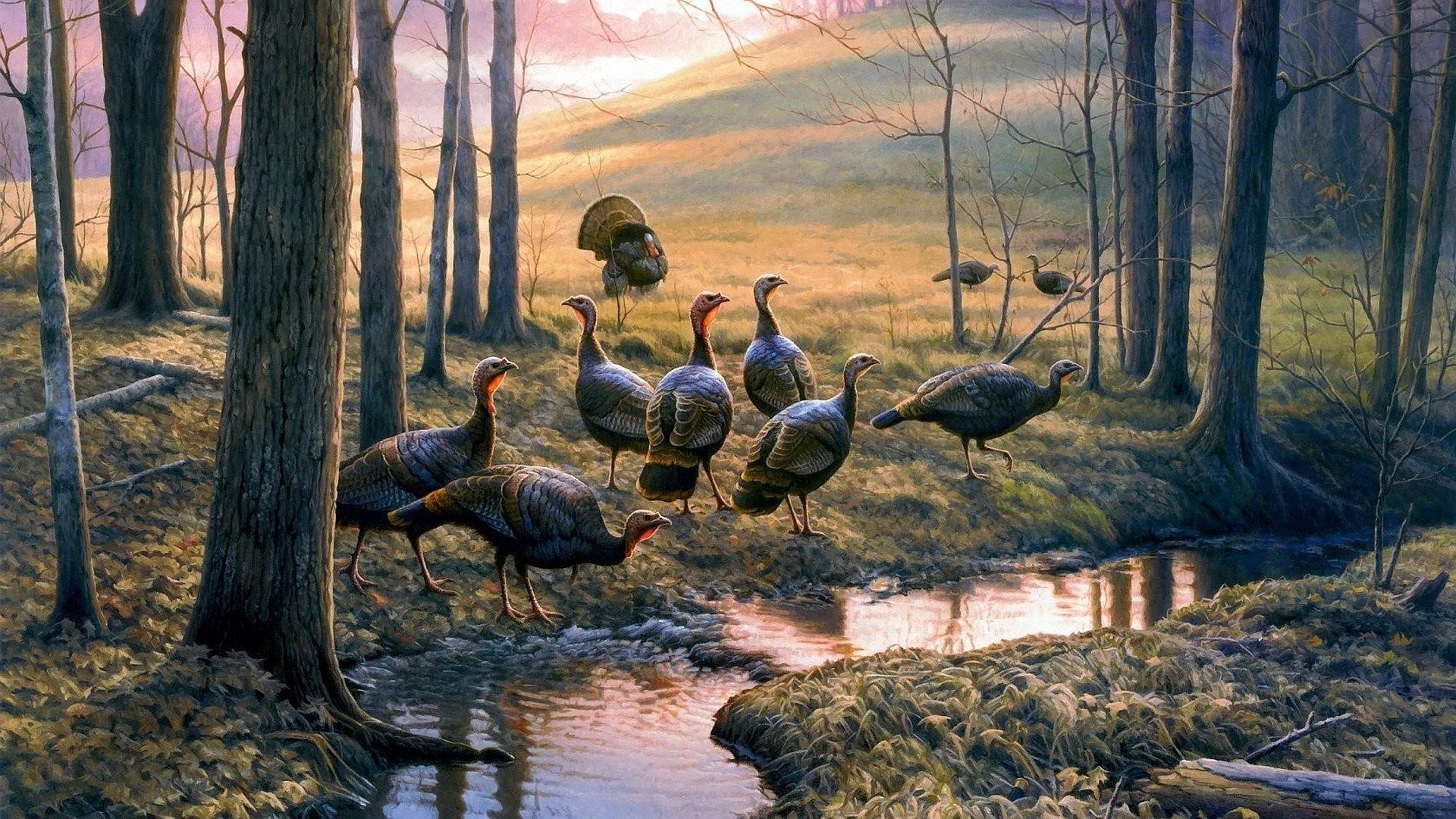Beautiful Wallpaper Turkey