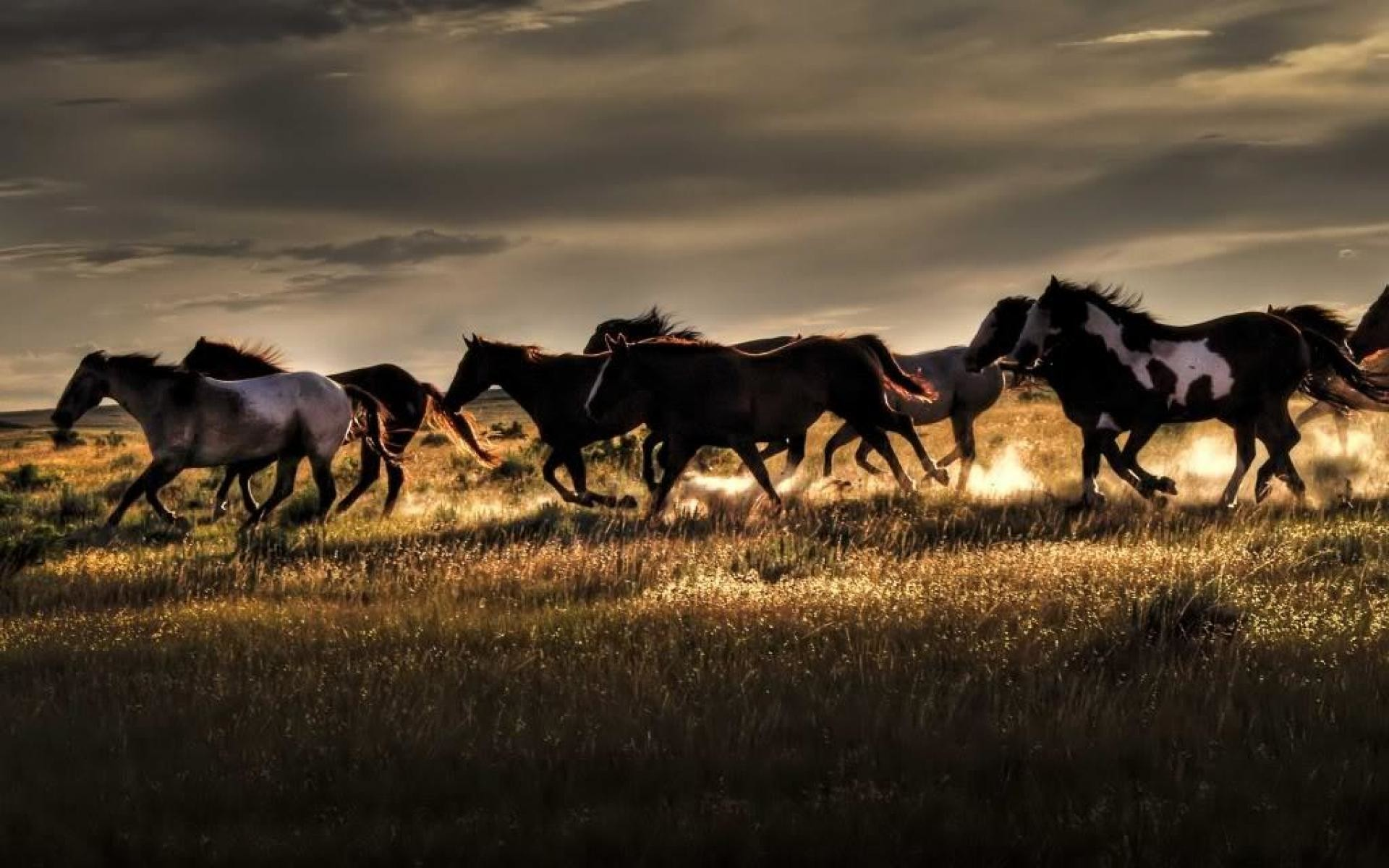 1920x1200 Download fantasy horses wallpaper wild horse