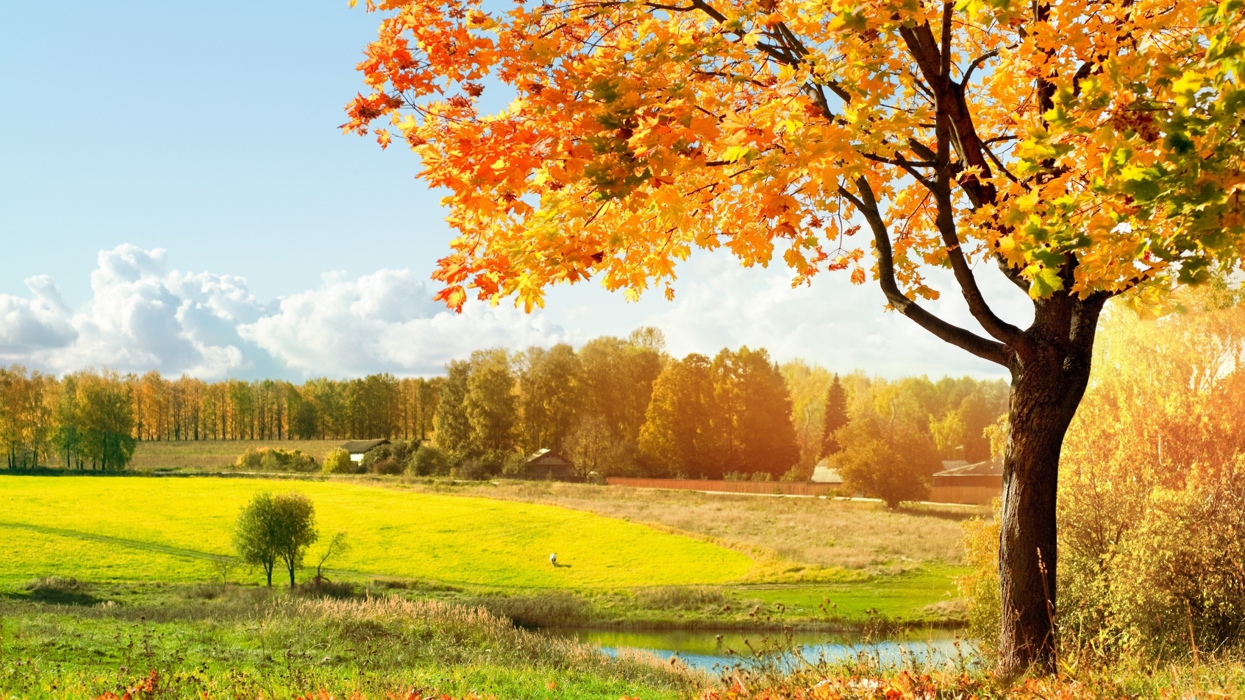 2560x1440 Beautiful Tree How To Set Wallpaper On Your Desktop Click The Download