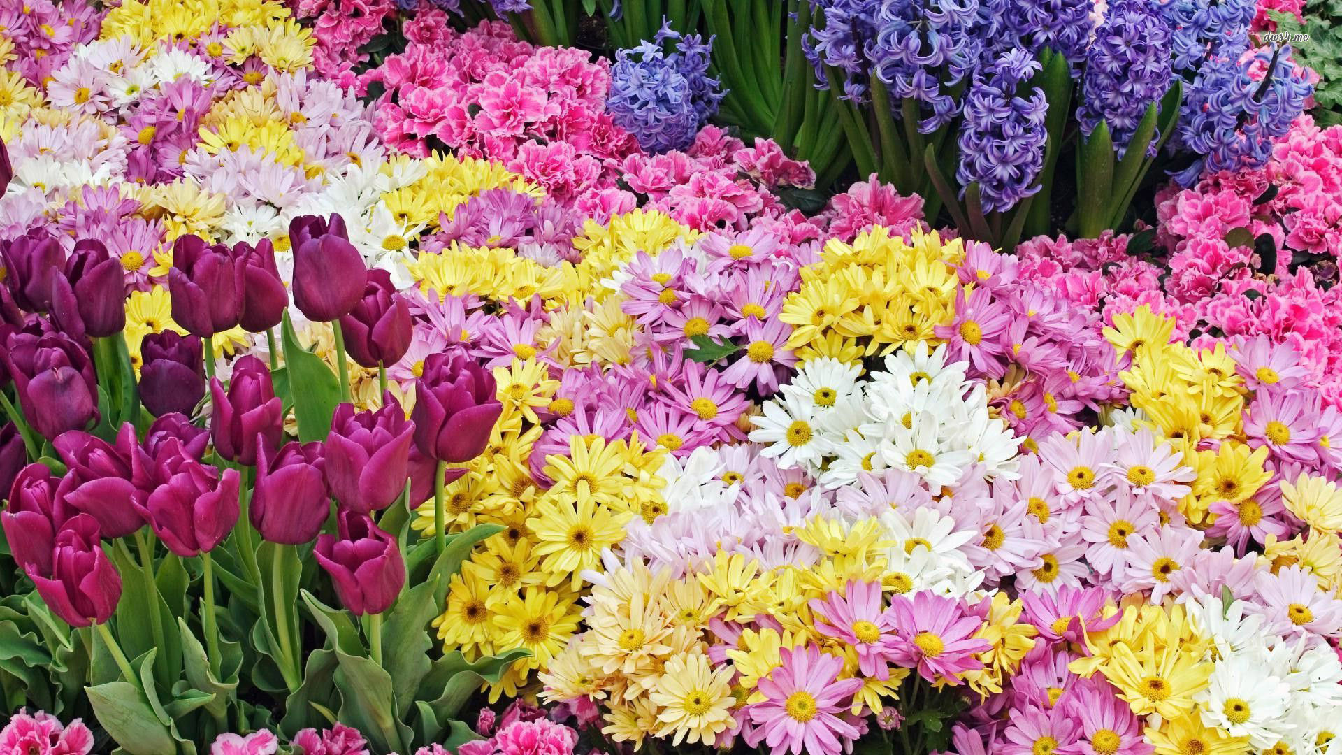 1920x1080 8. spring-flowers-desktop-wallpaper8-600x338
