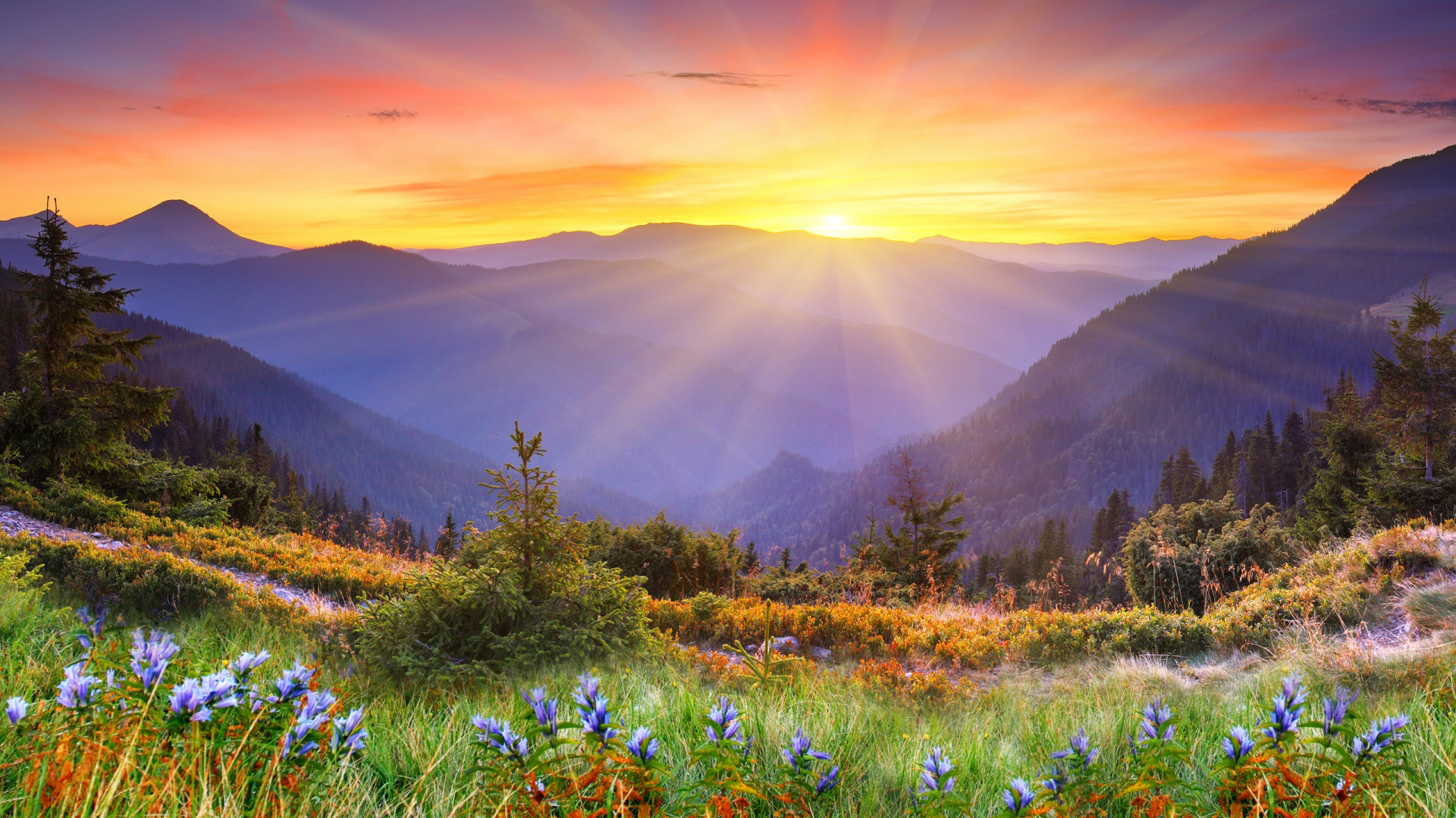 1920x1080 Mountain, Sunrise, Wilderness, Vegetation, Great Smoky Mountains Wallpaper  in  Resolution