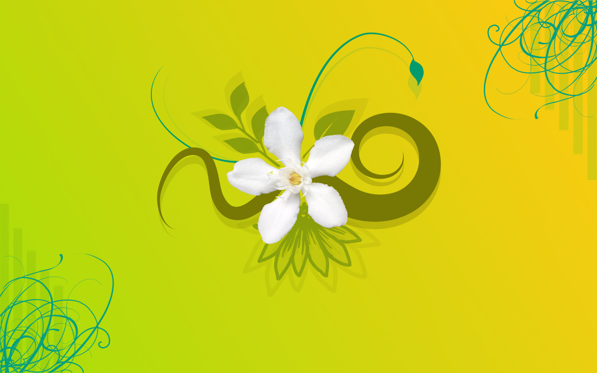 Name jasmine wallpaper 55 images 1920x1200 jasmine name and flower tattoo 22 jasmine flower wallpaper a1 izmirmasajfo