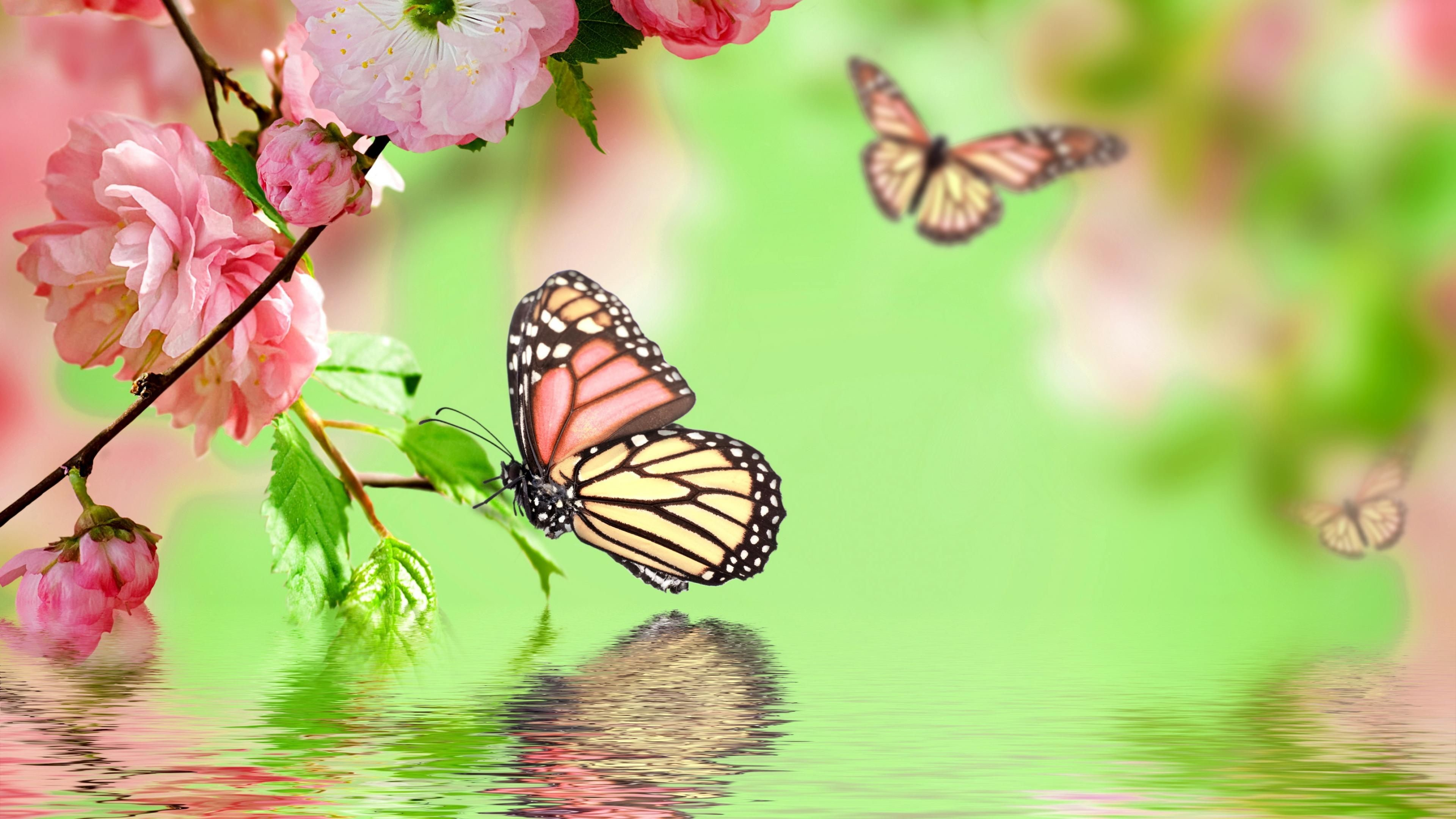 3840x2160 Butterfly Wallpaper Hd