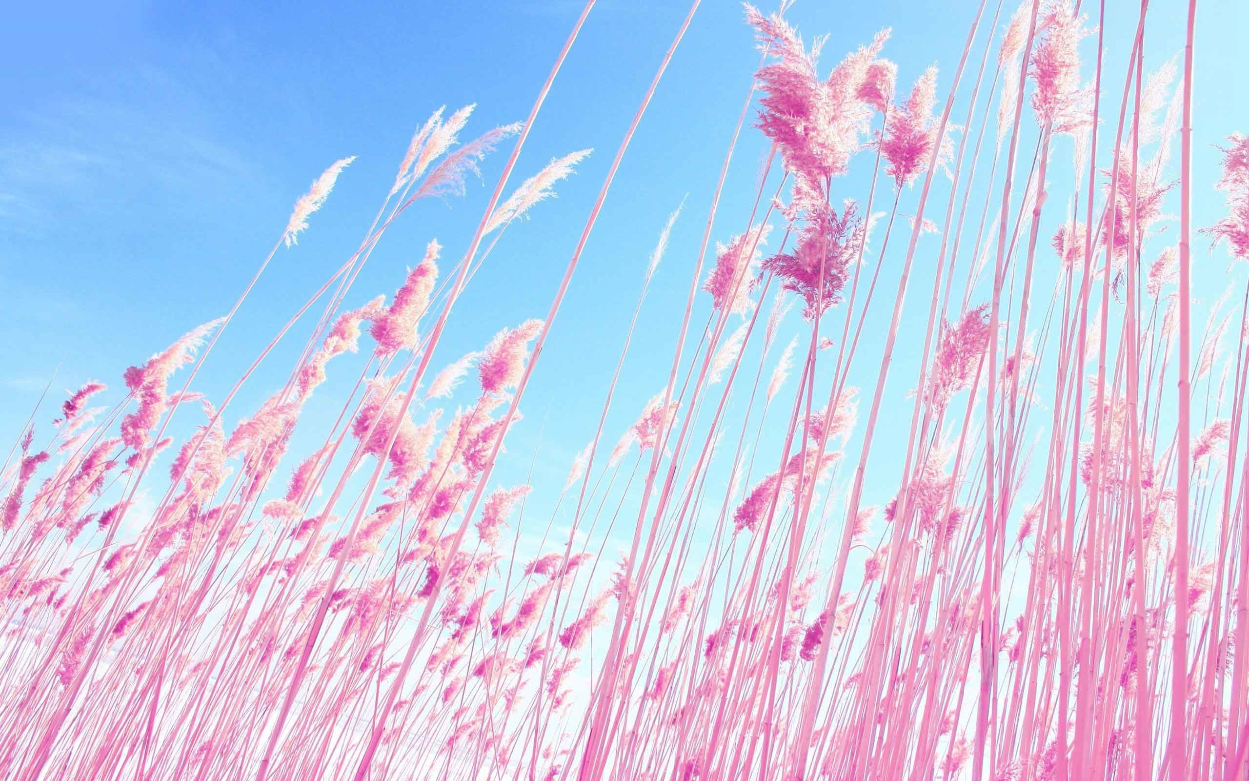 2560x1600 Plants Grass Dreamy Macro Pink Nature HD Live Wallpapers Download