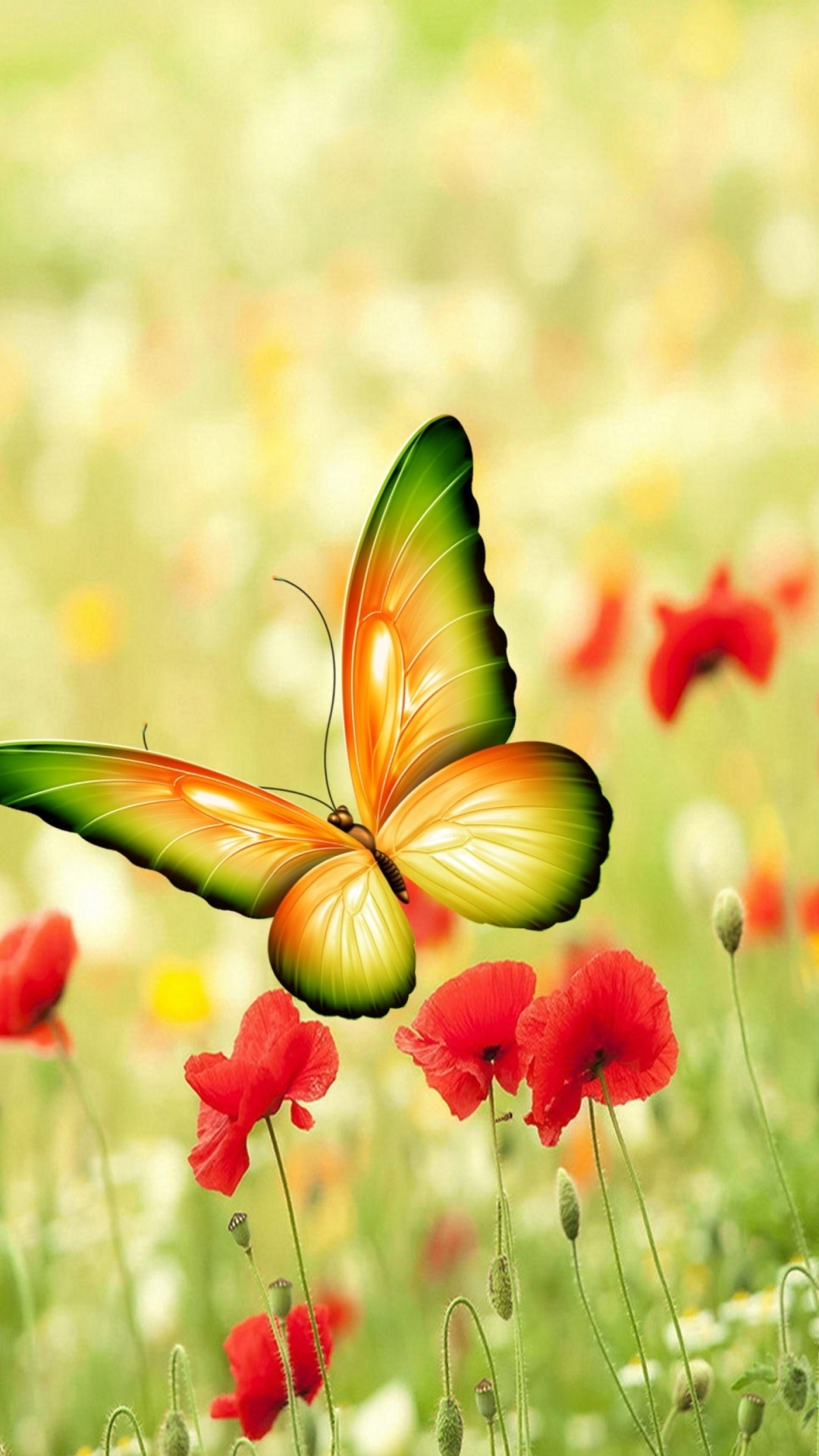 Butterfly Wallpaper 70 Images