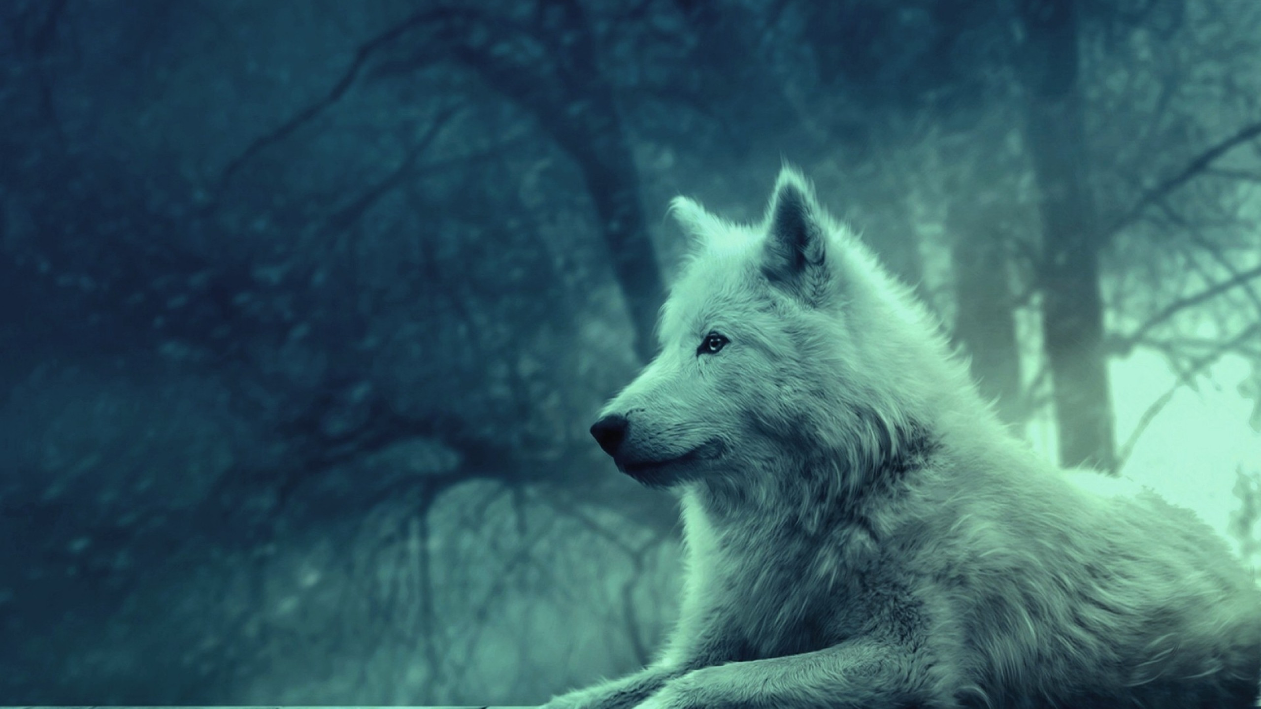 2560x1440 Preview wallpaper wolf, light, forest, wild, calm, peace