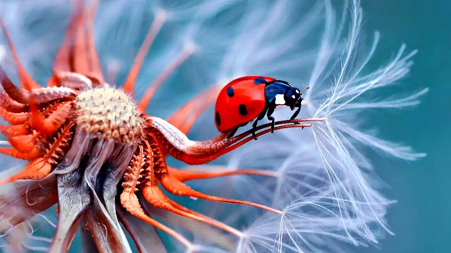 Ladybug Wallpaper 72 Images