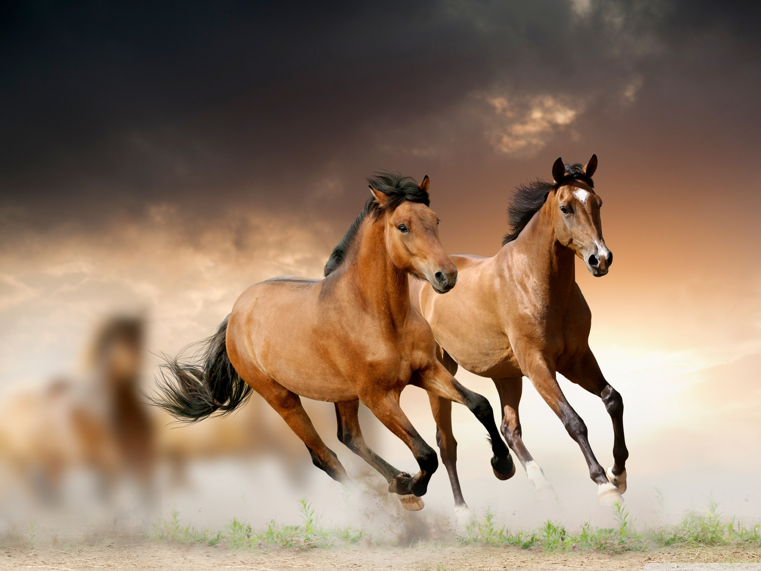 Running Horses Wallpaper 63 Images