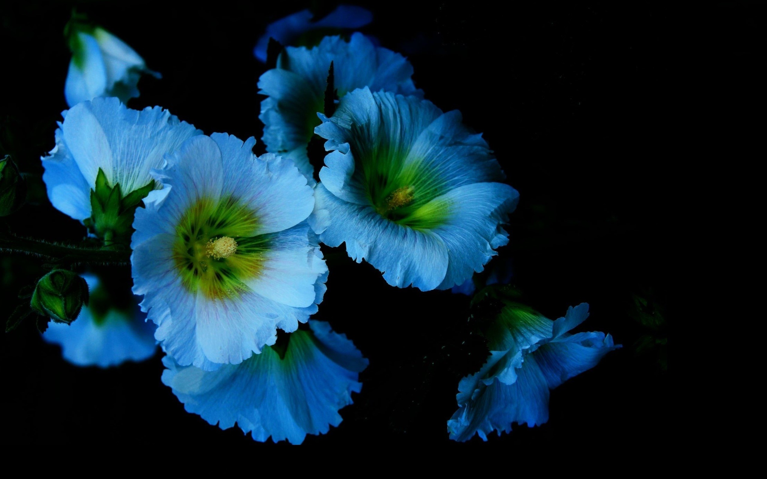 Flowers On Black Background Wallpaper (77+ Images