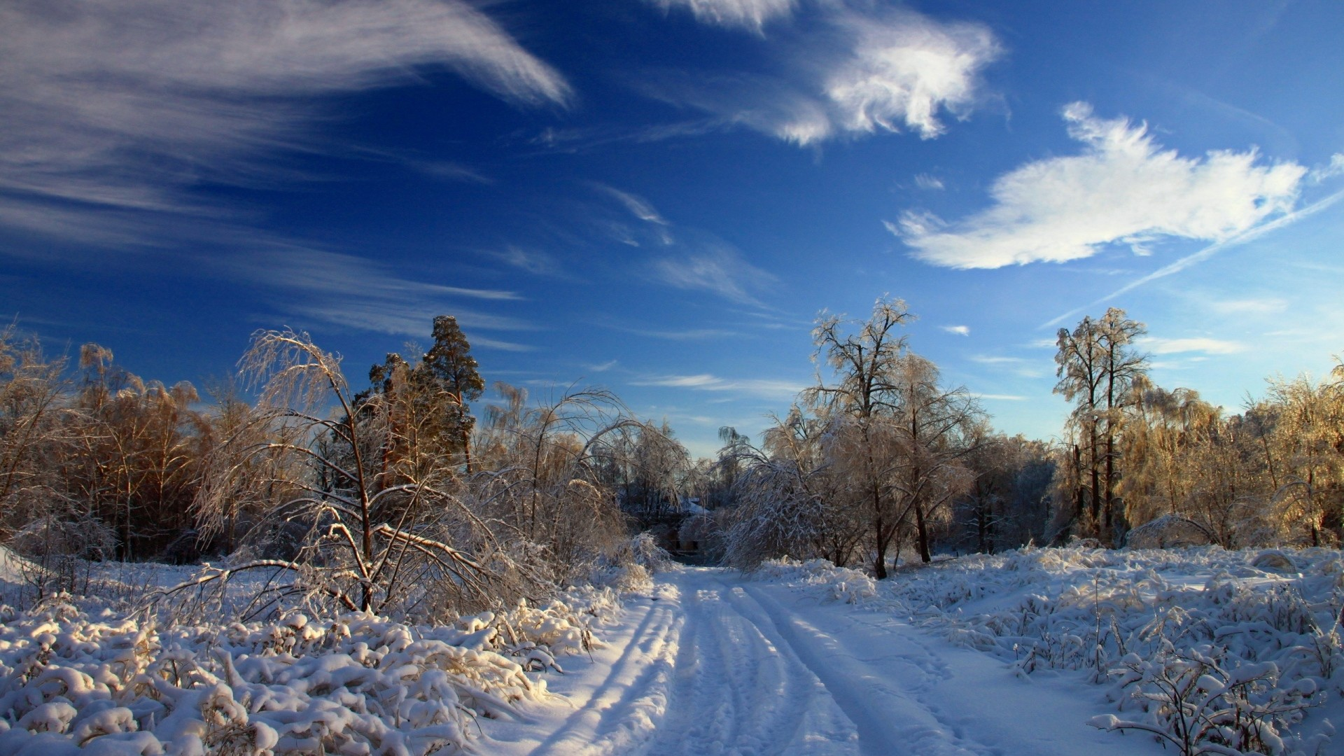 1920x1080  Wallpaper winter, snow, road, traces, bushes, trees, snowdrifts,