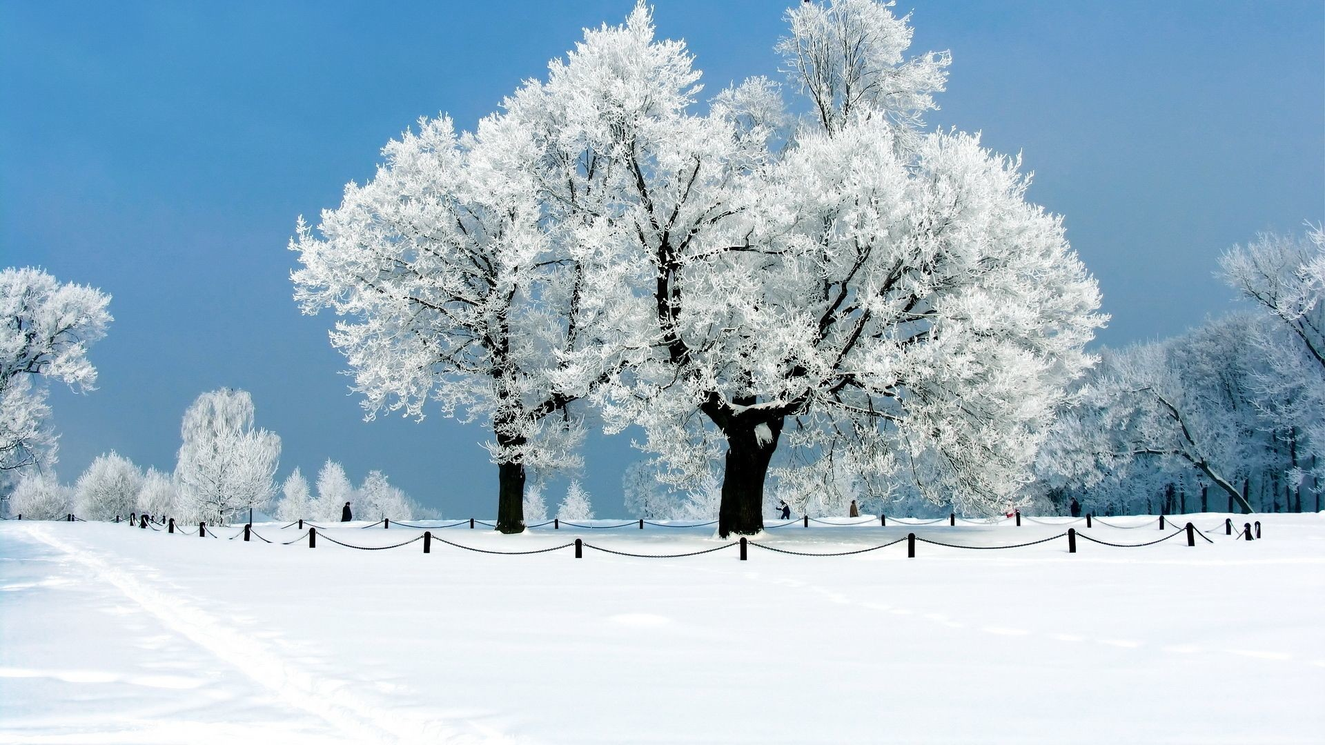 1920x1080 Images For > Winter Hd Wallpapers Widescreen