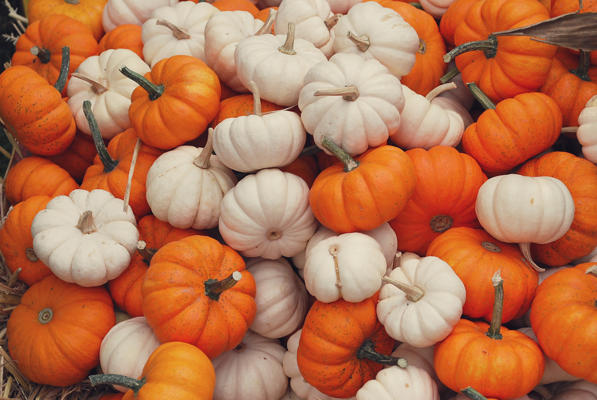 Fall scene wallpaper with pumpkins 52 images - Fall wallpaper pumpkins ...