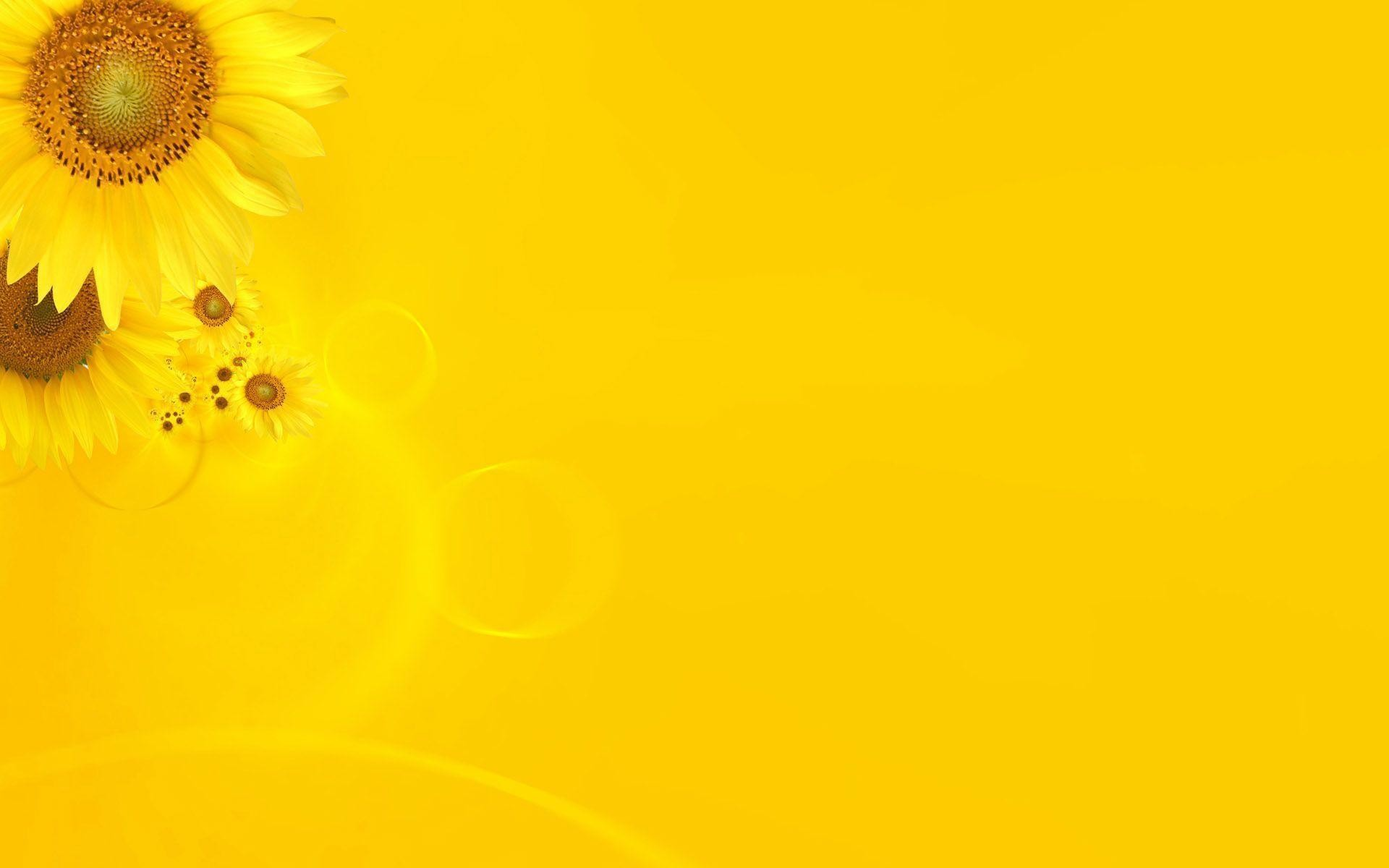 1920x1200 Wallpapers For > Bright Yellow Background