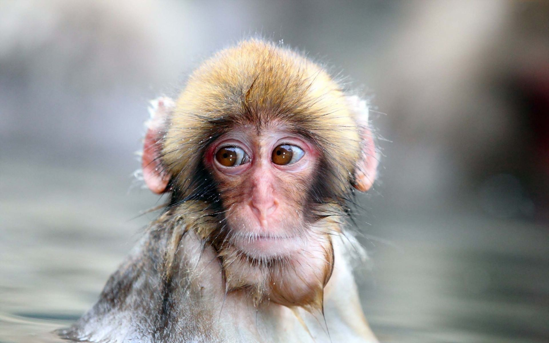 1920x1200 Innocent Monkey | HD Animals and Birds Wallpaper Free Download ...