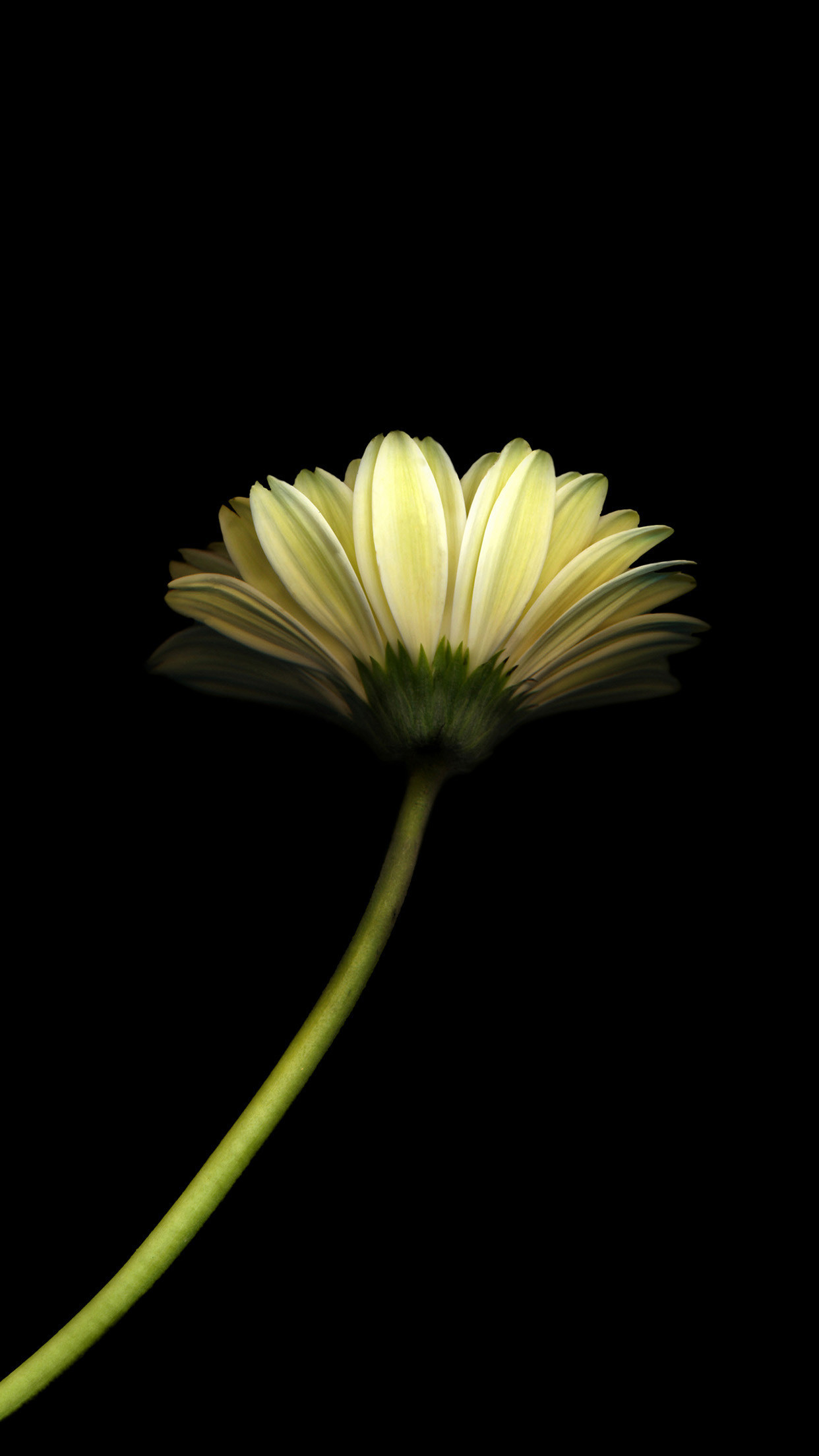 1242x2208 Free Flower Wallpaper for android Phone Wonderful Minimal Flower Dark  android Wallpaper Free