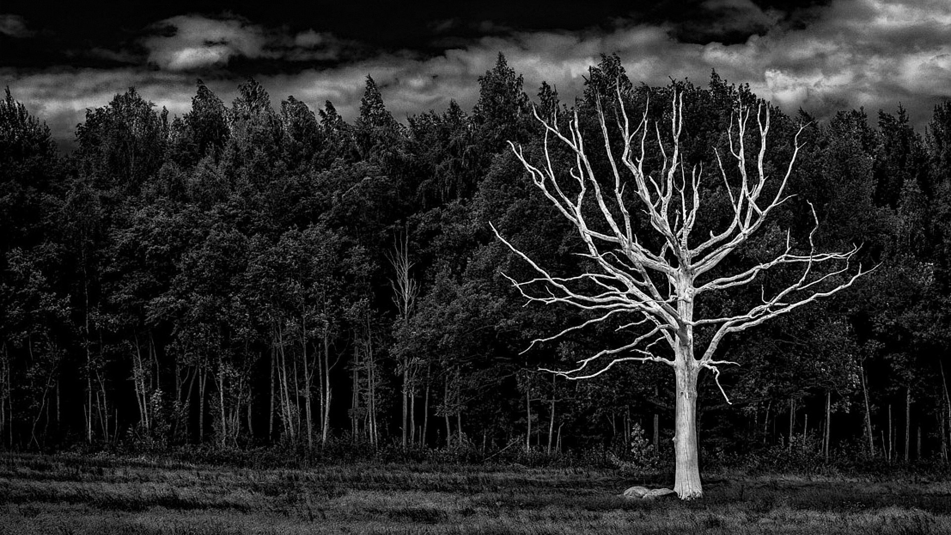 Dark tree background images