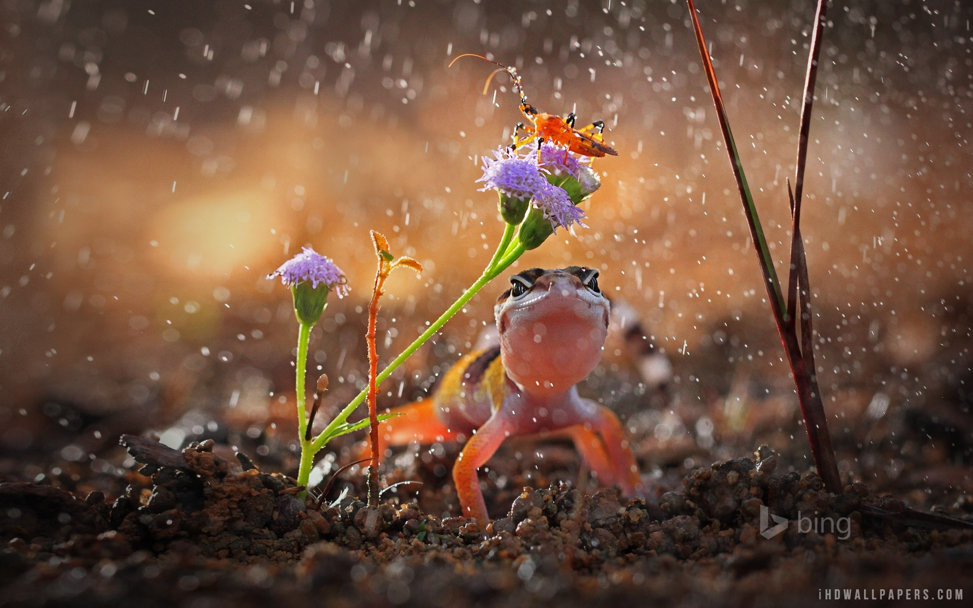 1920x1200 Raining Wallpapers Group 1920×1200 Rainy Day Images Wallpapers (43  Wallpapers) | Adorable