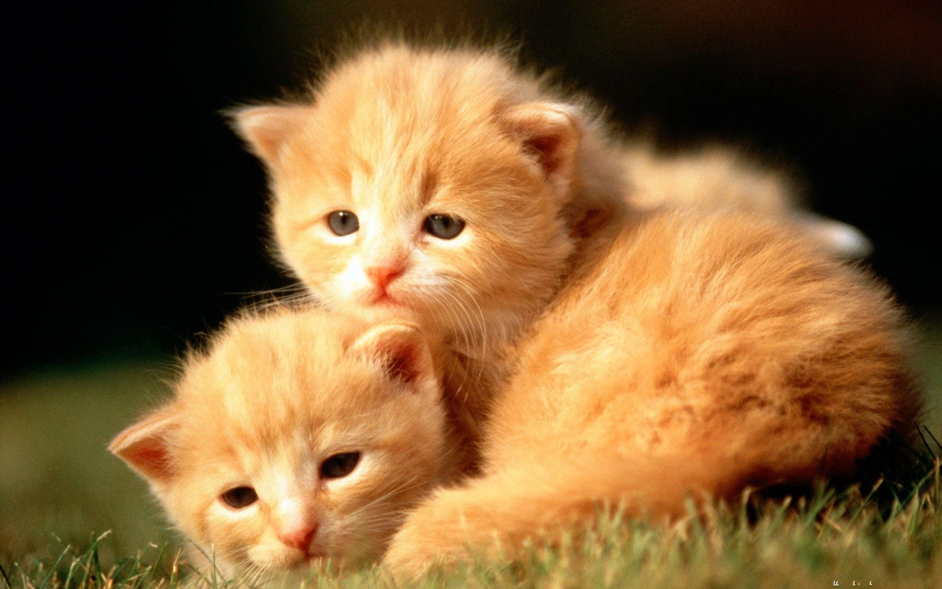 cute baby animals wallpapers animal hd quality