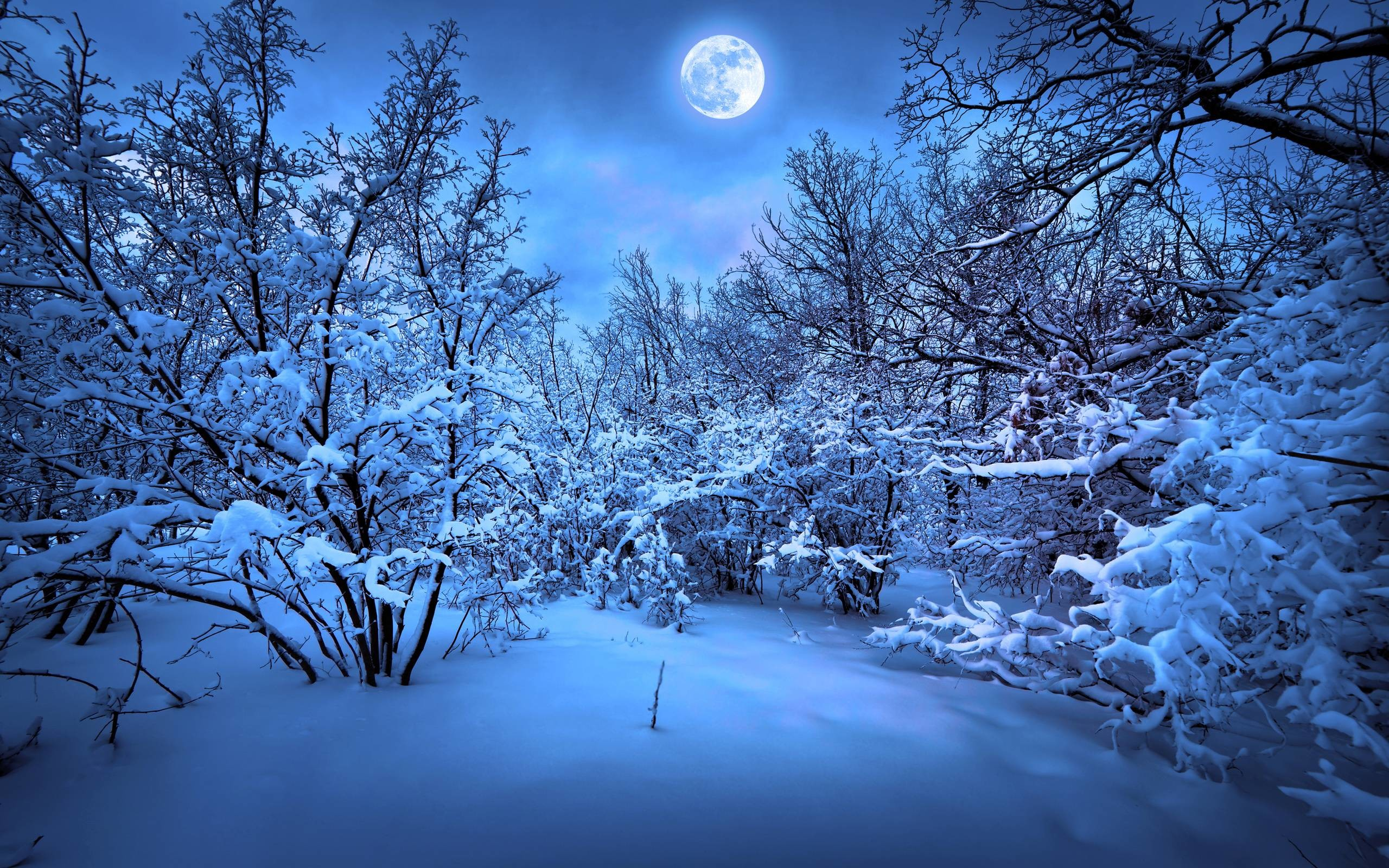 705062 gorgerous snowy christmas backgrounds