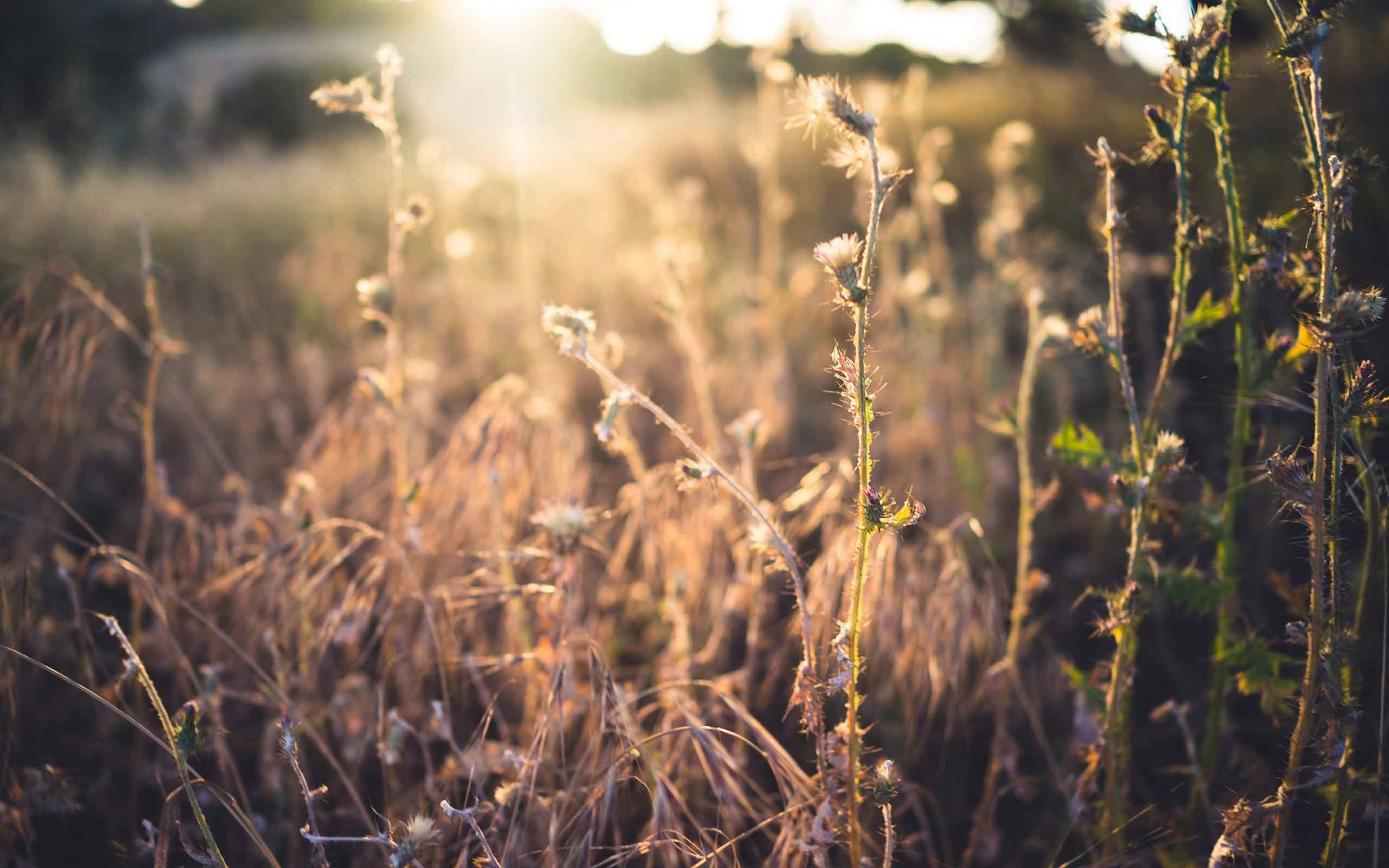 2560x1600 Plants Bokeh Sunlight HD Nature Backgrounds For Mac