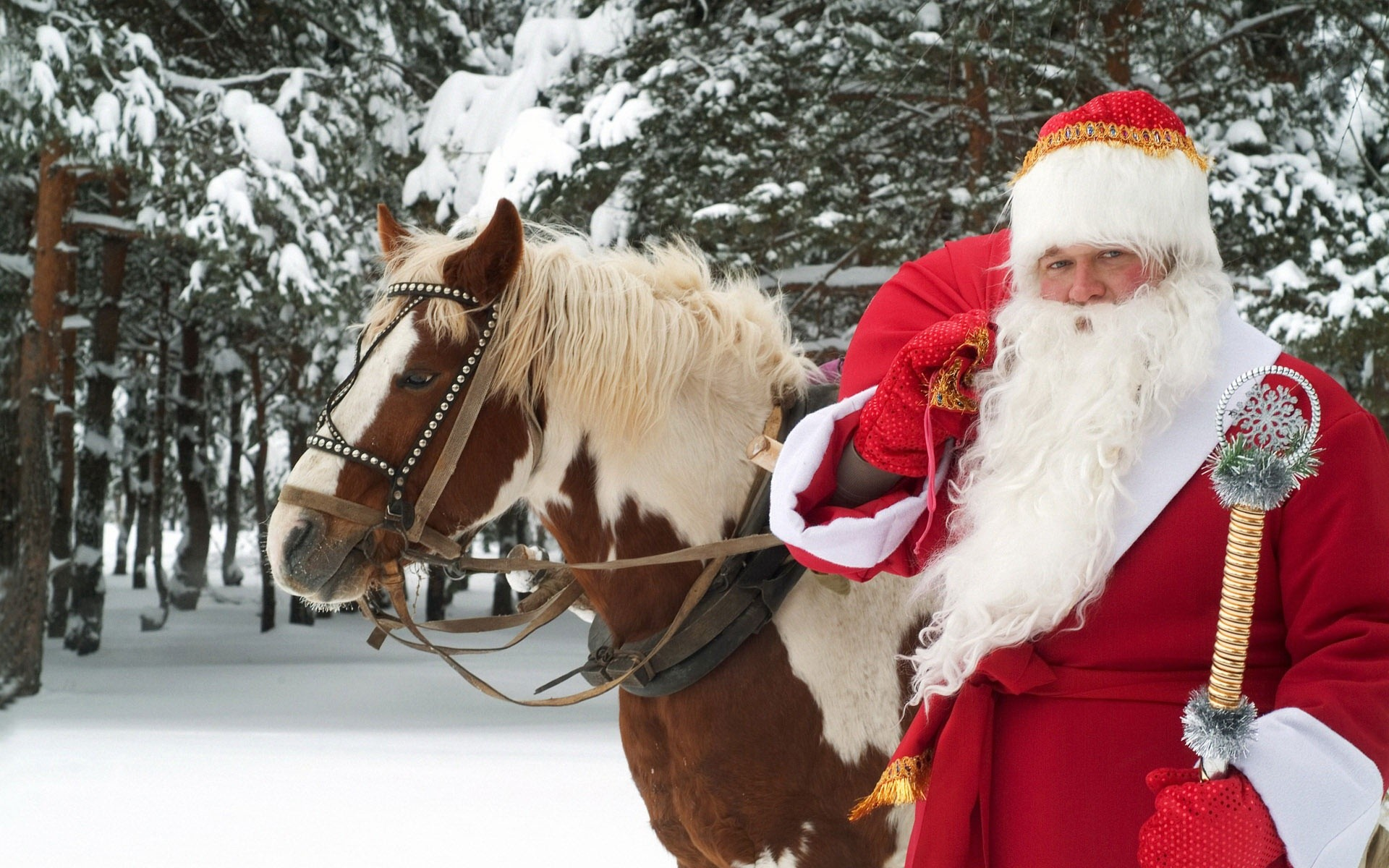 Christmas Horse Wallpaper 52 Images