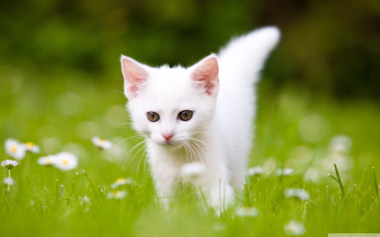 Cute kitten pictures wallpaper 60 images - Cute kitten wallpaper free download ...